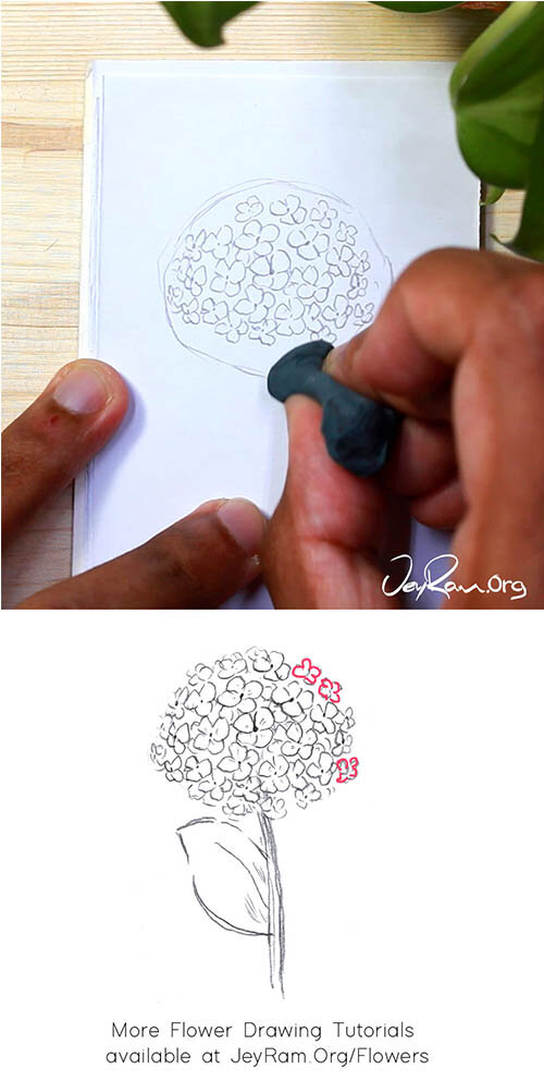 How to Draw a Hydrangea Step by Step for Beginners by JeyRam #Hydrangea #flower #drawing #tutorial