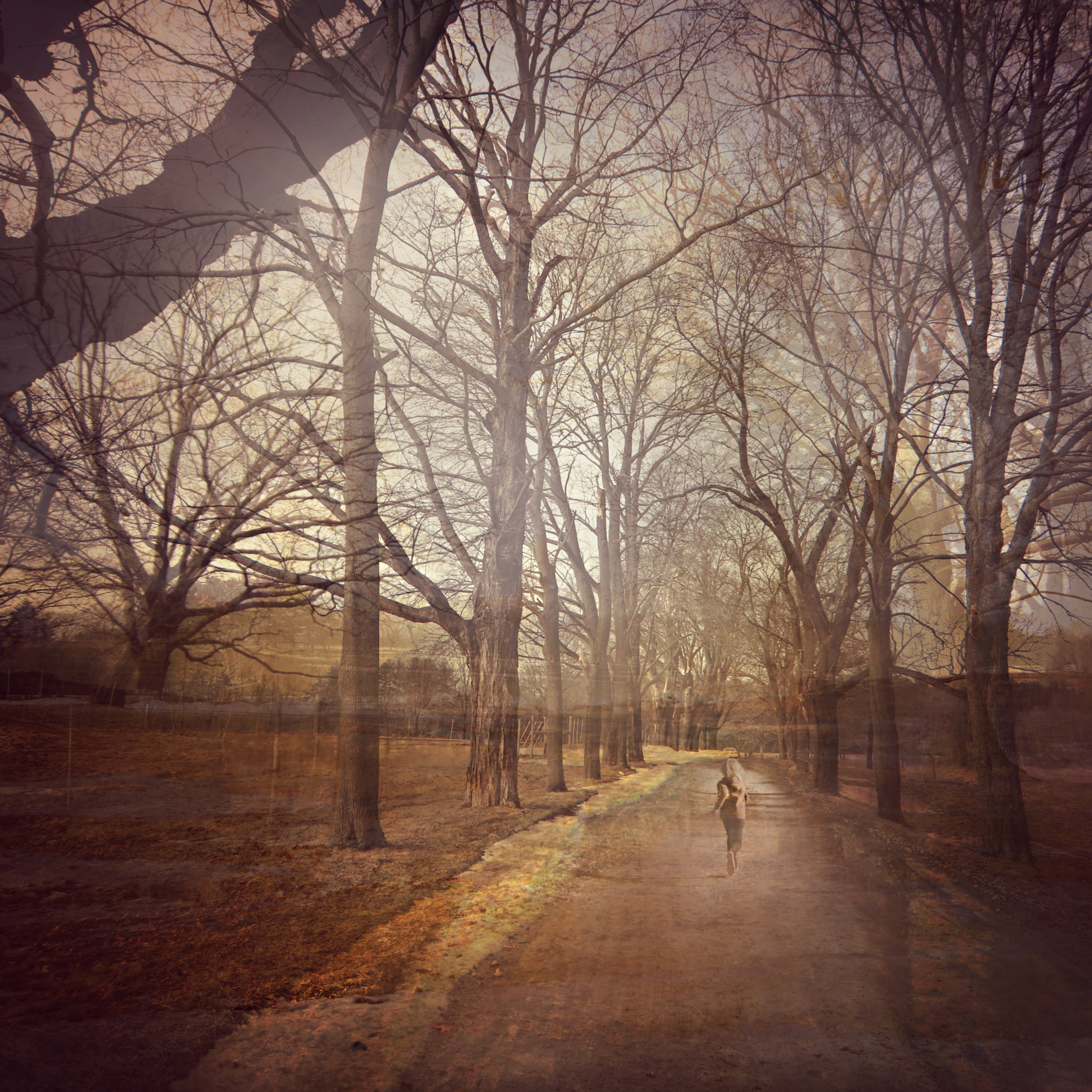 Pascal appleton running trees road.jpg