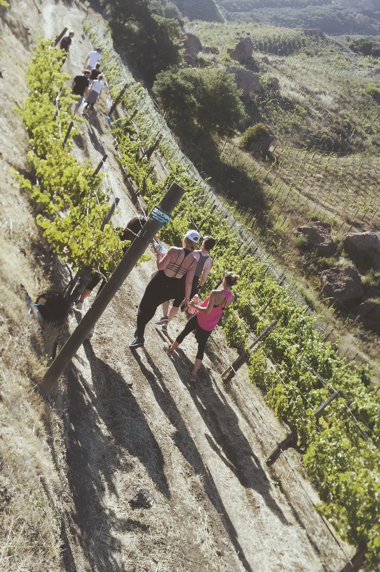 $25/person Hike is about 2+ Hours Includes 1 glass of Wine and 750 ml Water Includes Organic Energy Snack See Vineyards, Exotic Animals, Natural Chaparral Ecosystems of the Santa Monica Mountains  For more information click  here