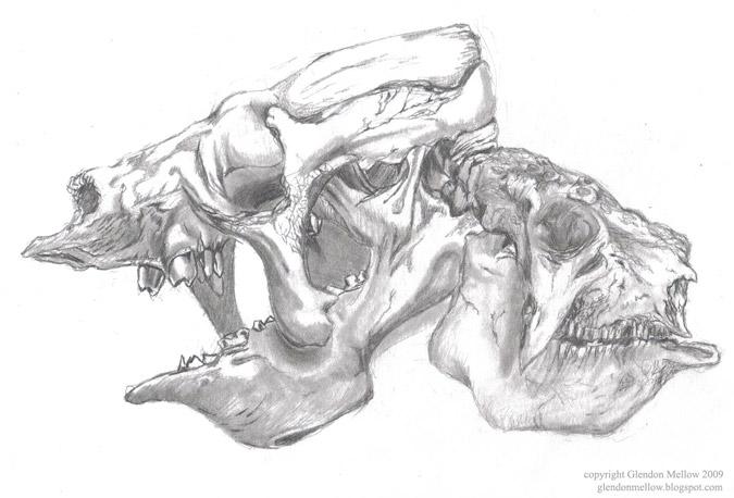 Eremotherium and Glyptodon Skulls. Prehistoric mammal skulls drawn from the displays at the Royal Ontario Museum.