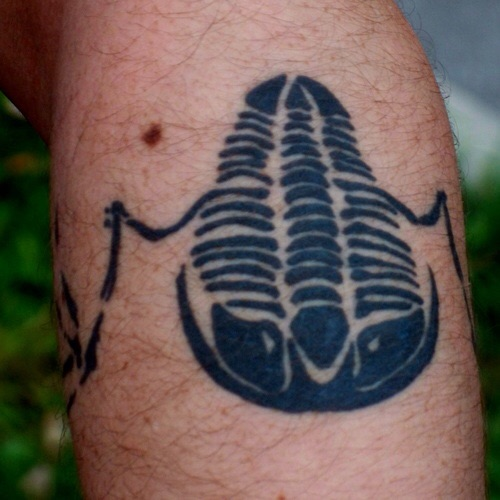 Sooner or later the theme becomes an obsession that needs to be permanently marked on your life. A close up of part of the flying trilobite inked on my left arm.