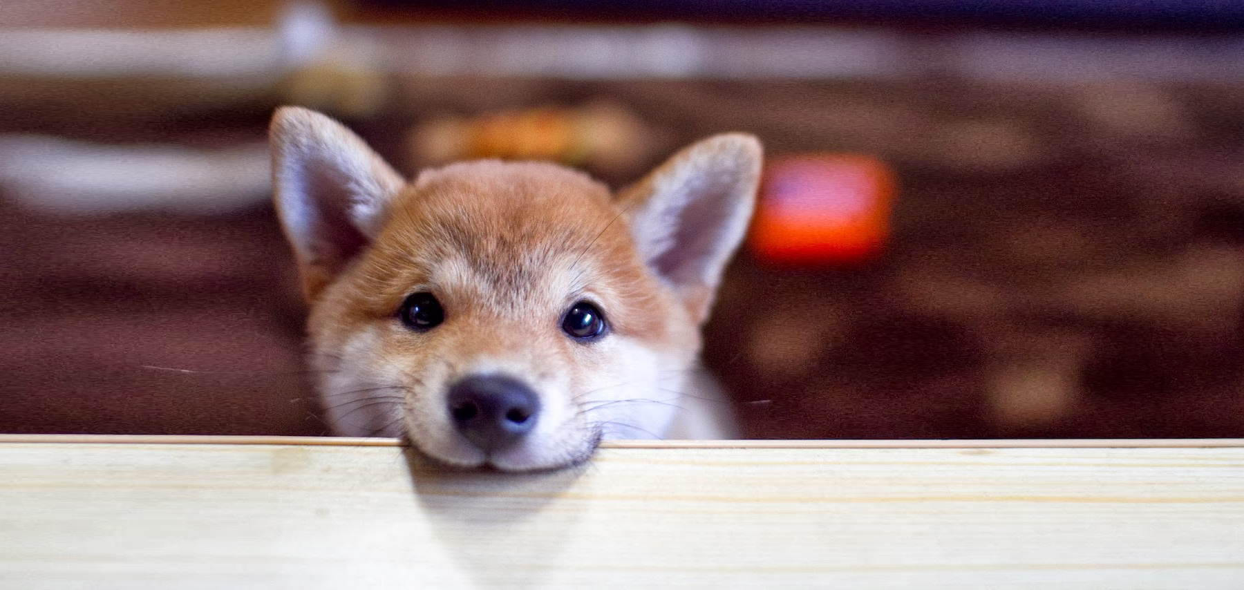 Midwest Shiba Inu Rescue is a registered 501(c)3 non-profit and licensed rescue.   Save a shiba!    Donate
