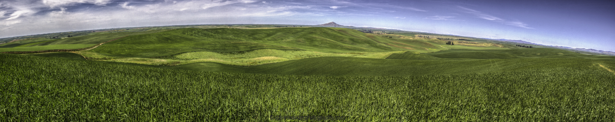 Palouse Panorama with Steptoe Butte in the distance.