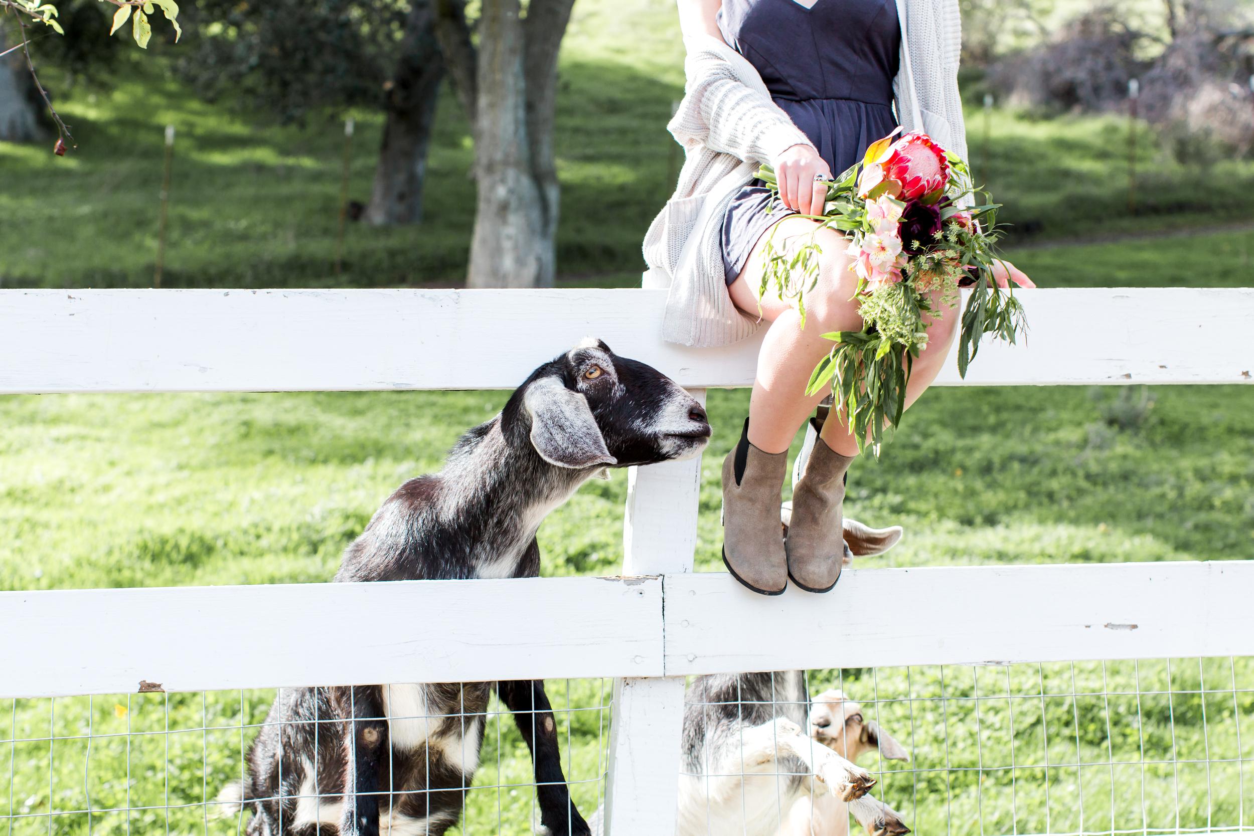 sunol-california-film-wedding-photography