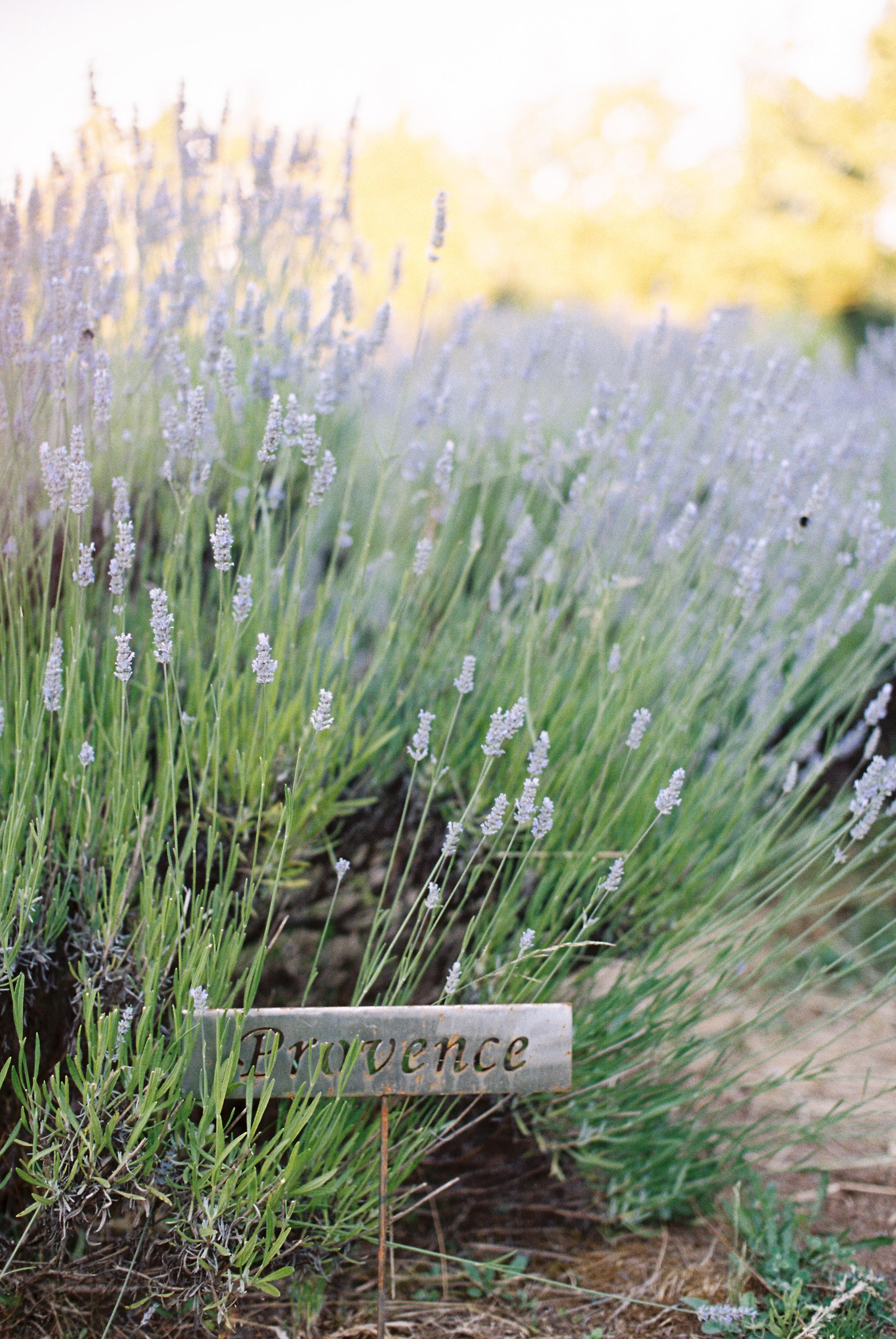 california-fine-art-film-wedding-photographer-85.jpg