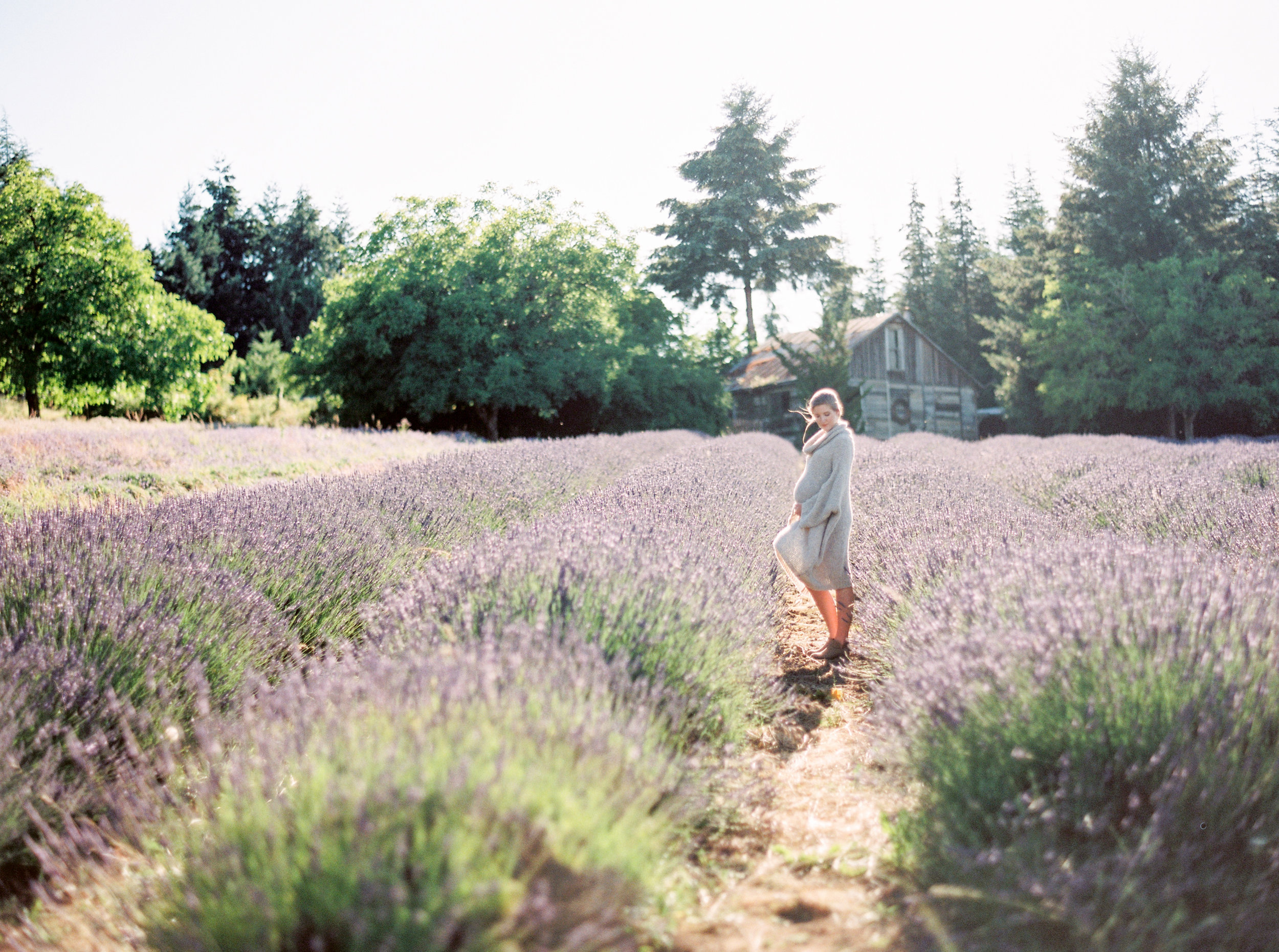 lavender-field-matnernity-photography-1.jpg