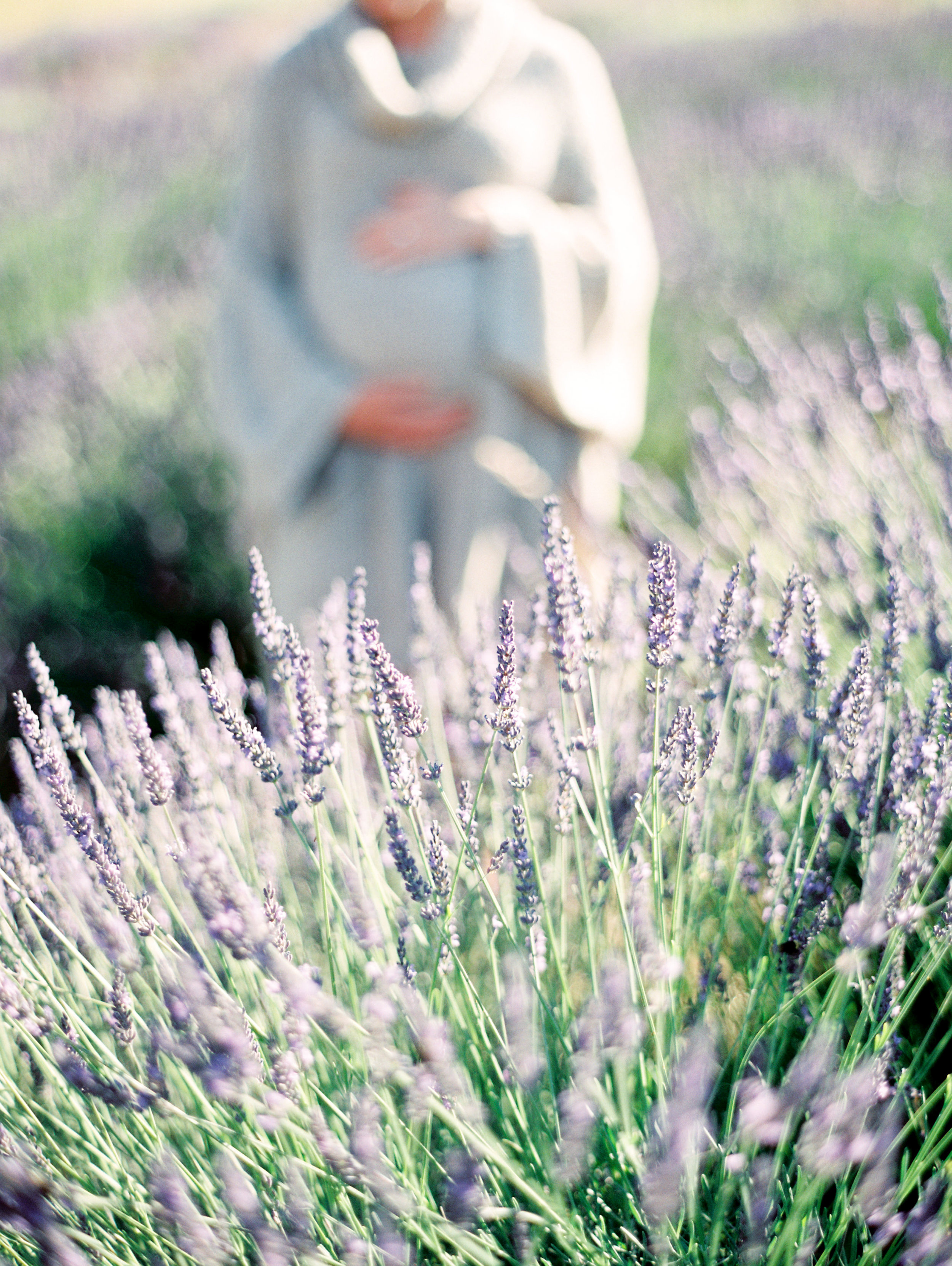 lavender-field-matnernity-photography-22.jpg
