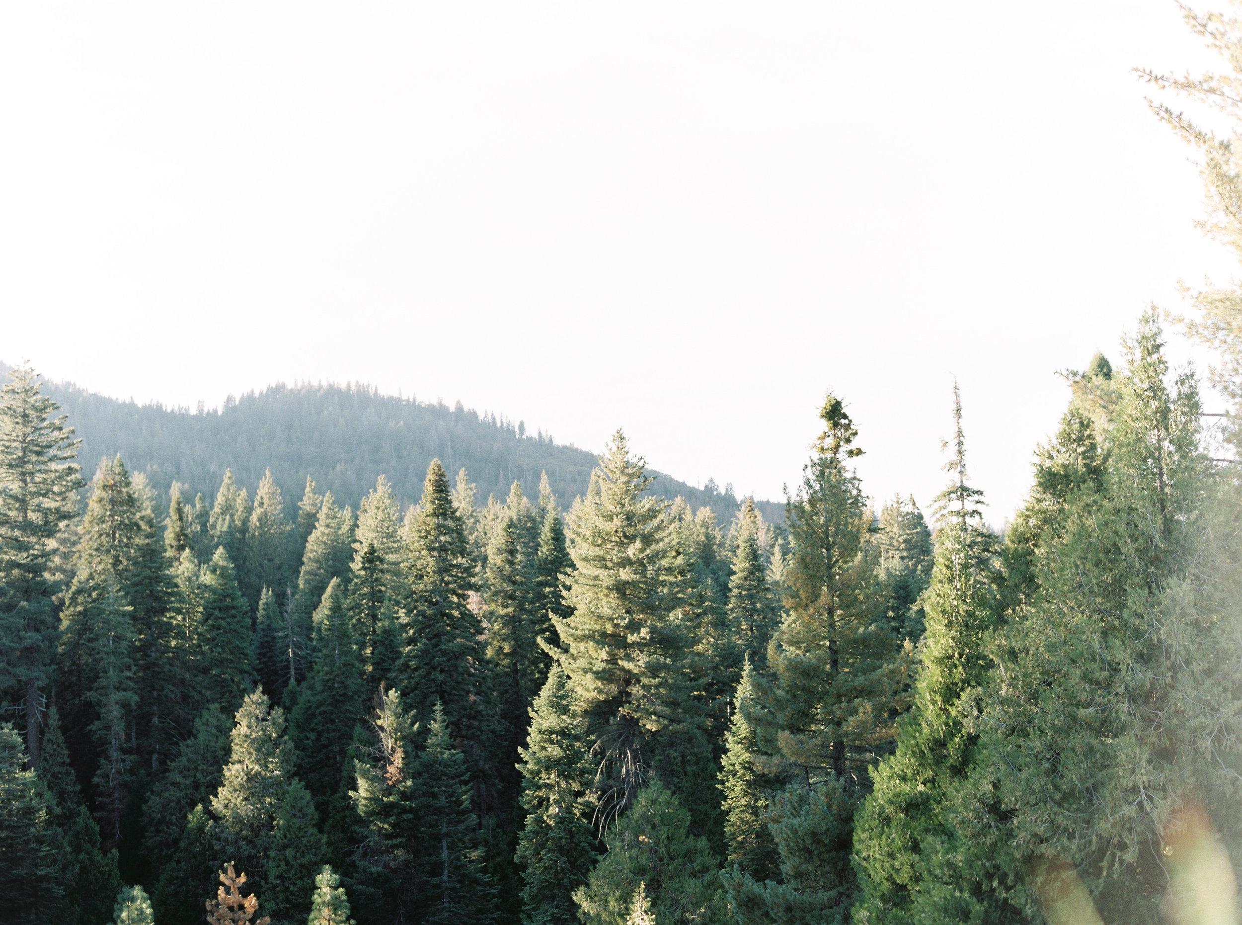 Tenaya-lodge-wedding-at-yosemite-national-park-california-20.jpg
