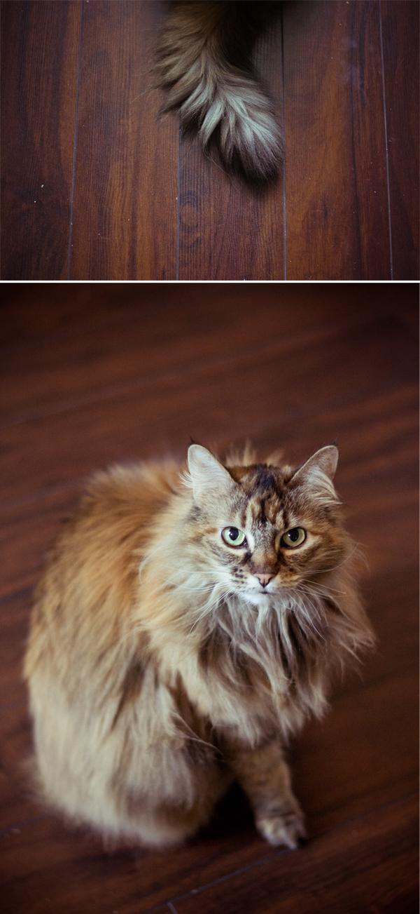 CatTails.jpg