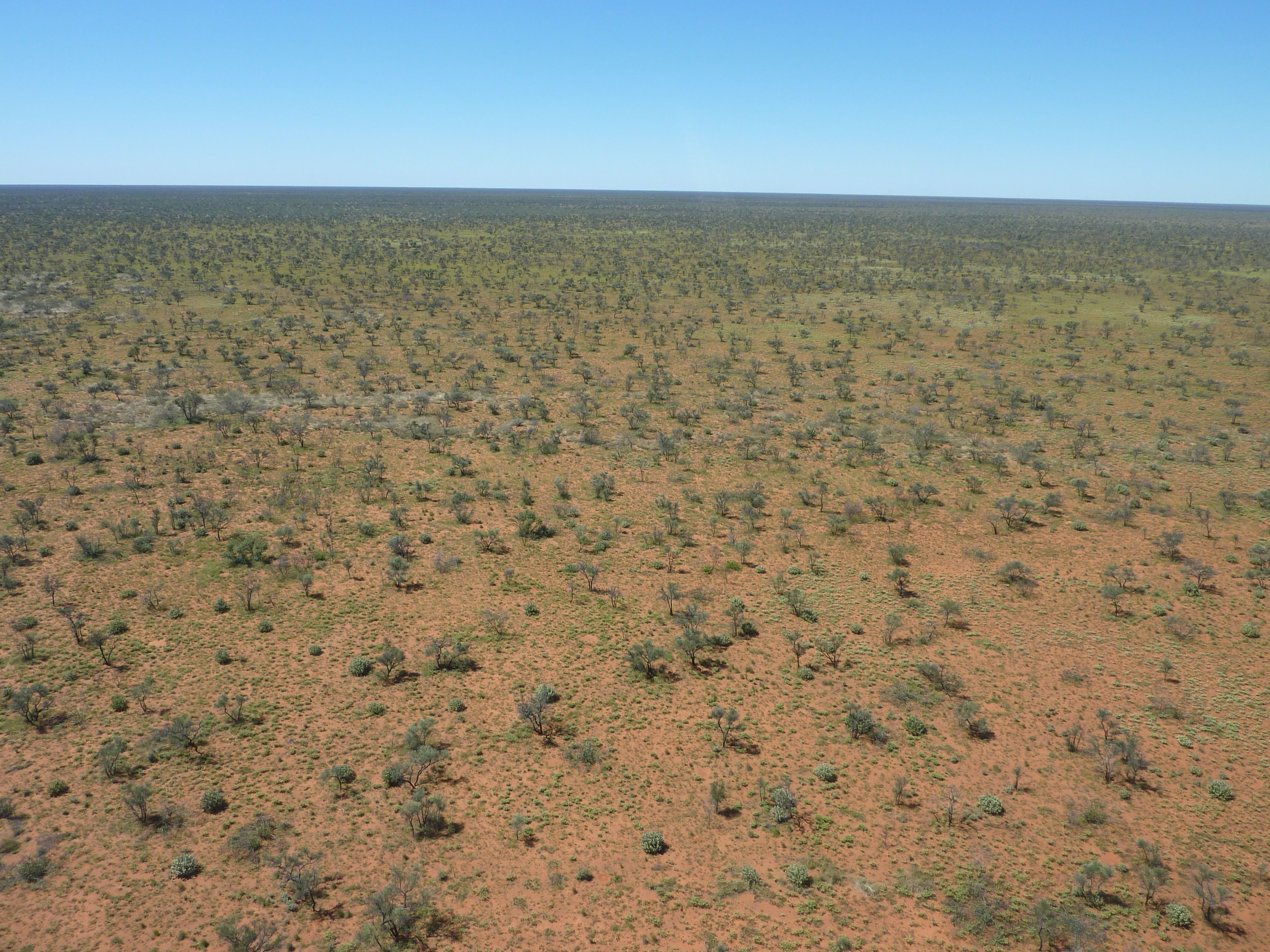 The outback remains one of the world's largest and most pristine wilderness areas. Helicopter and even camel are sometimes an ecologist's only hope of getting to surveys sites.
