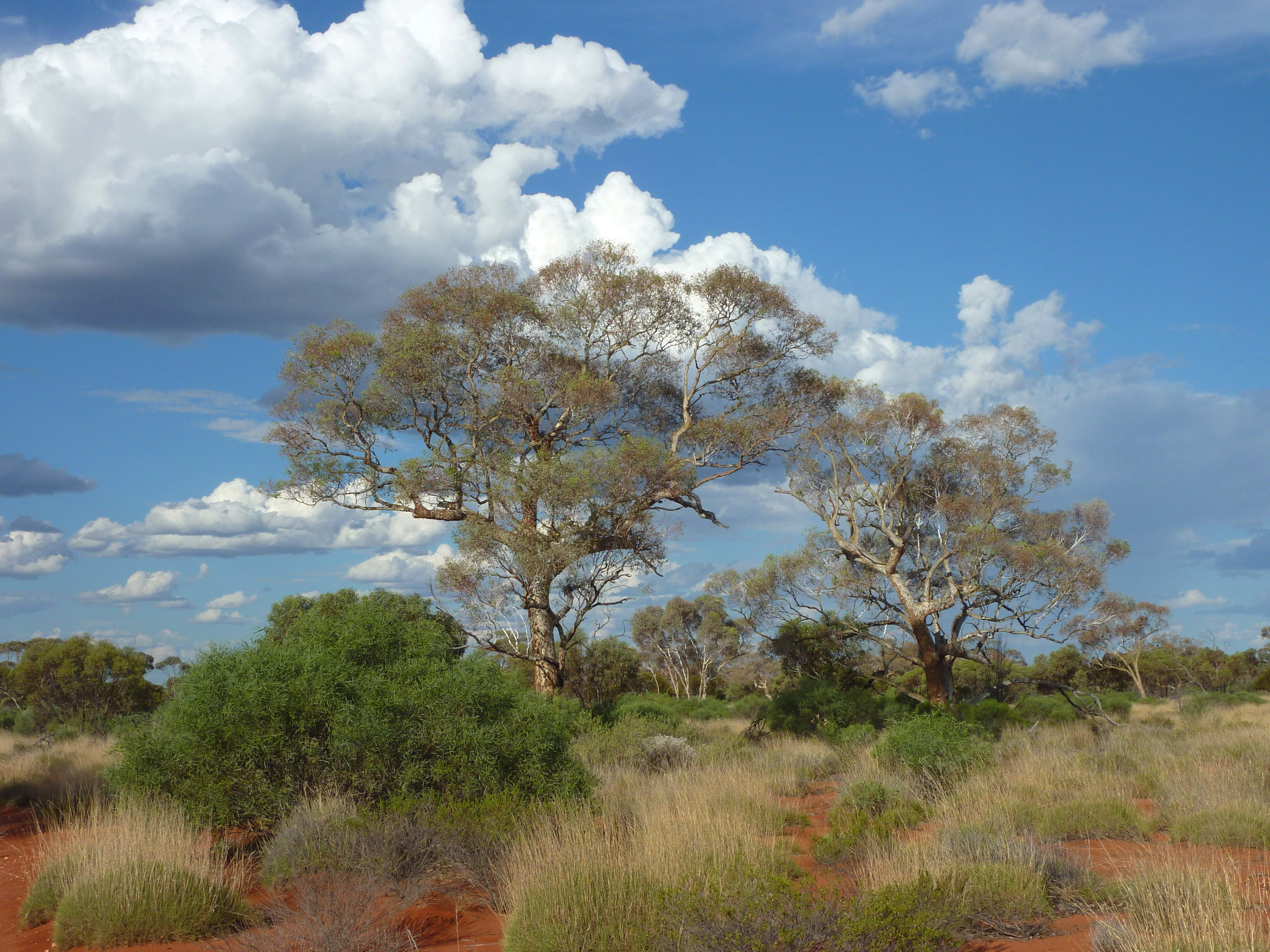 The blue skies near Neale Junction WA, a well-known locality for Princess Parrot, on a more cloudy afternoon.
