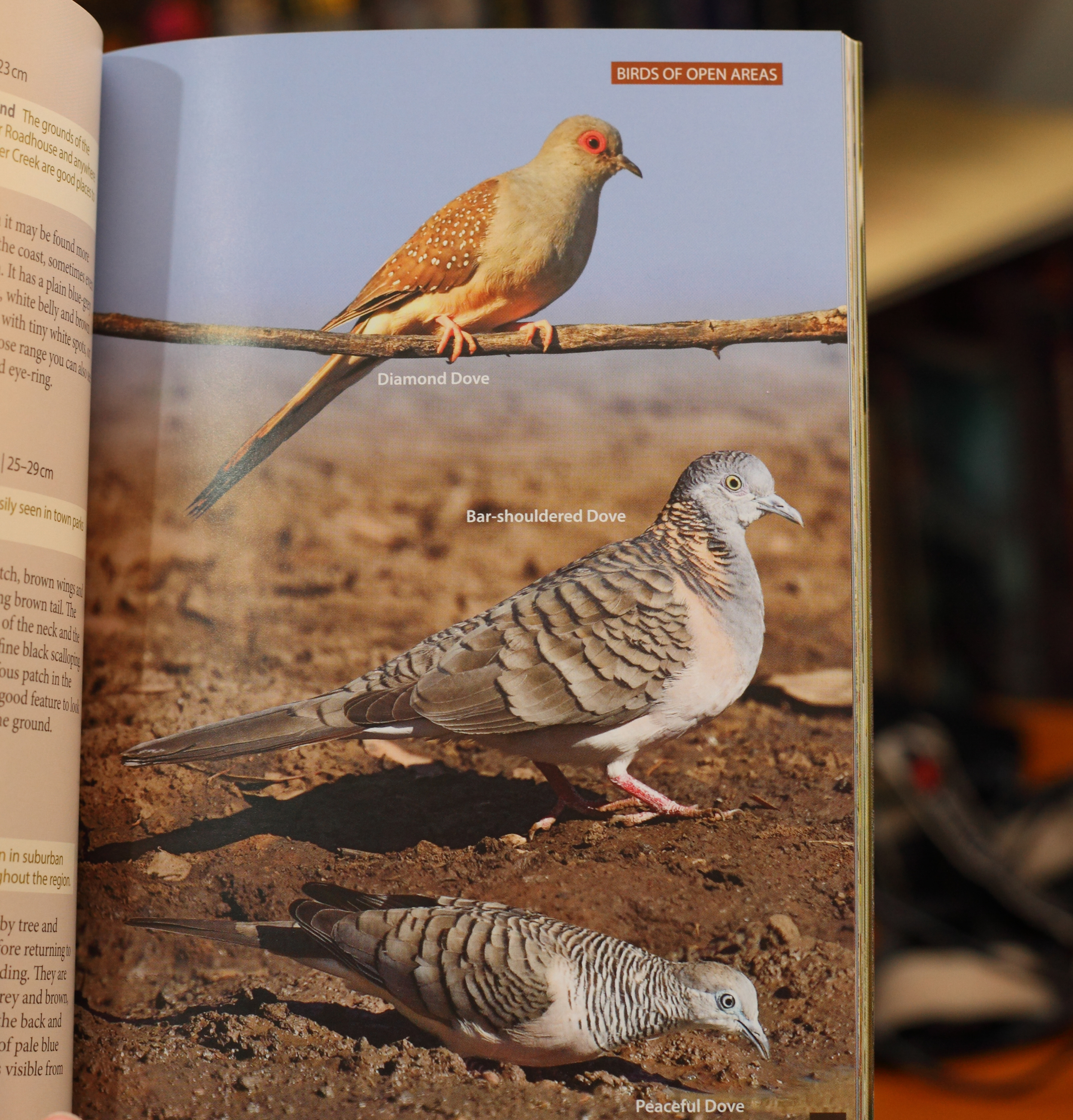 Mostly the scale of the images is spot on as in this page of Top End doves.