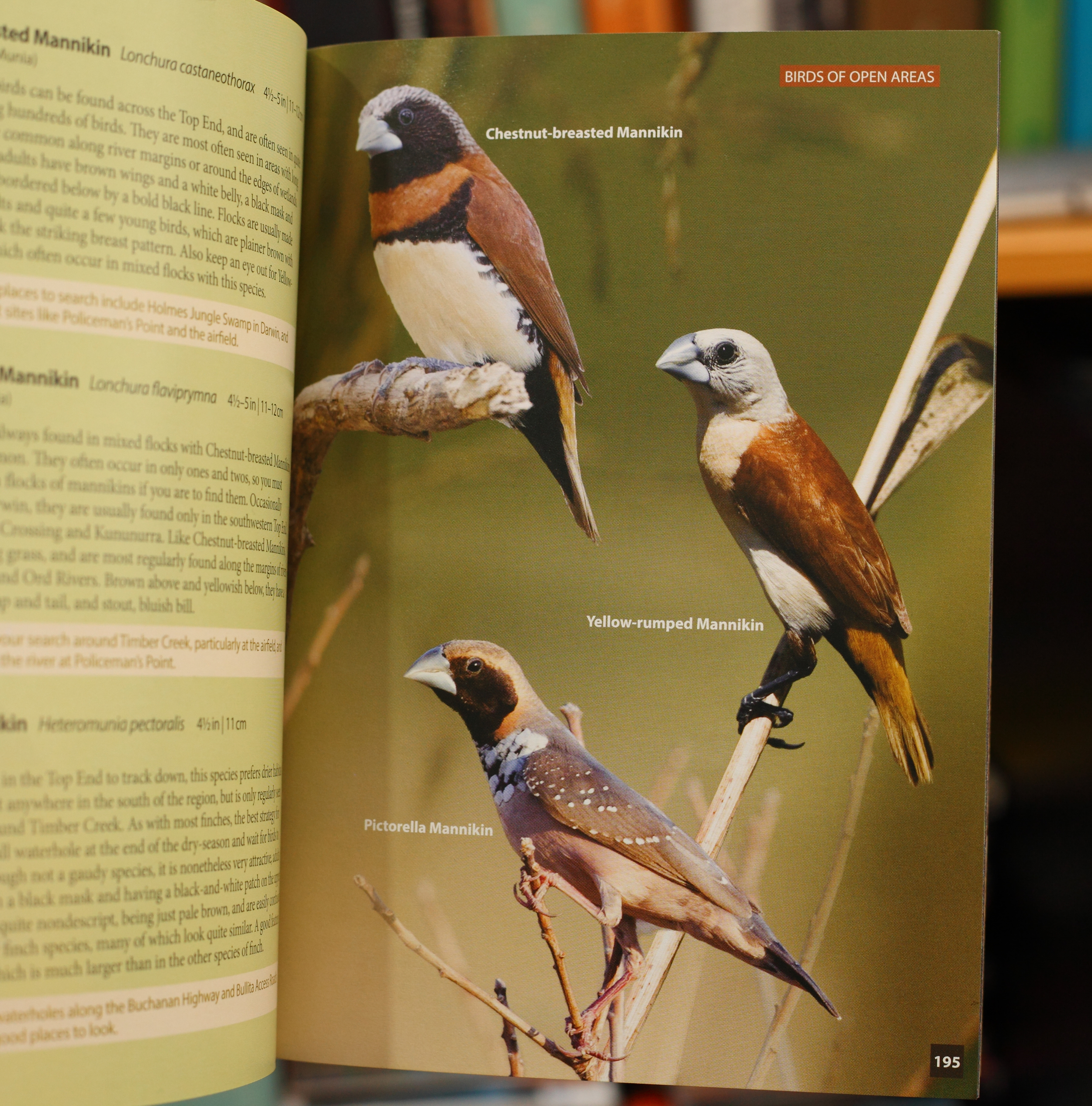 One of the finch pages: flawless images with simple, beautiful presentation.