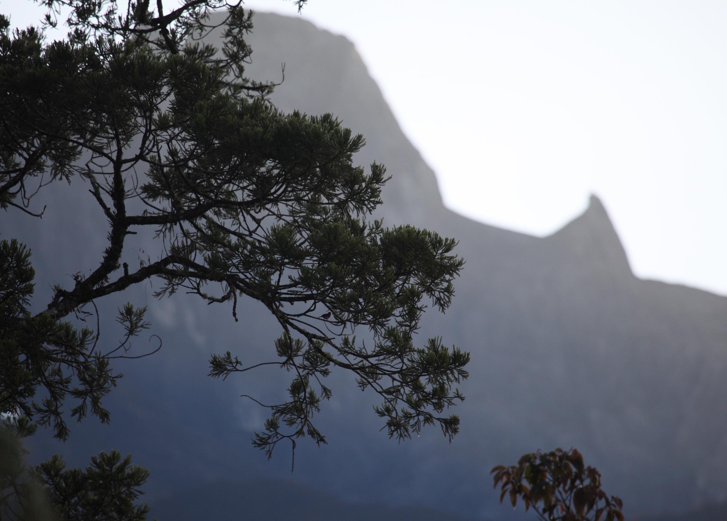 Mount Kinabalu 04.jpg