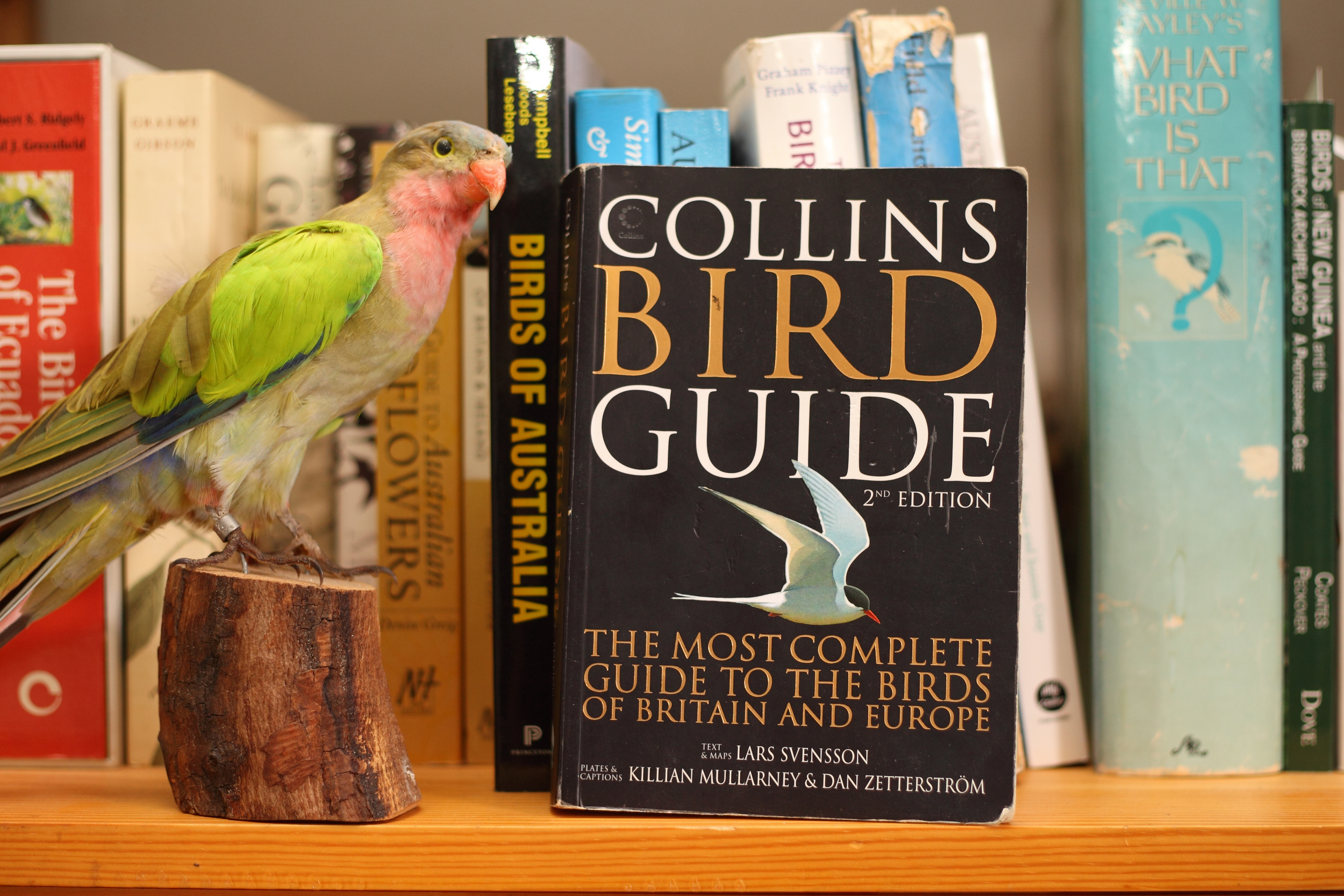 If the imminent field guide from CSIRO Publishing achieves even close to the acclaim that this book has received it'll be a huge success. No pressure.