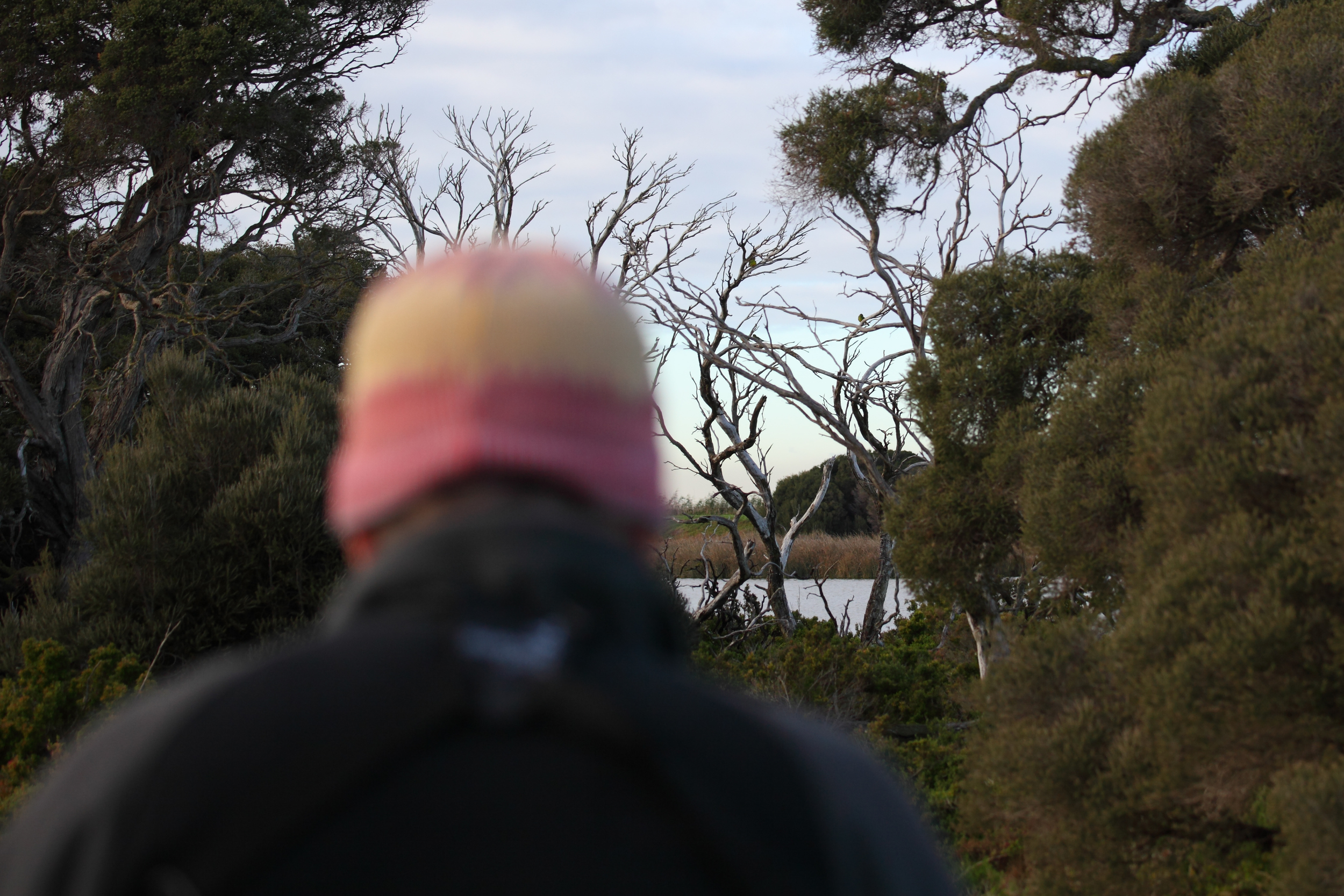 The  Gang of Four  at a distance in 2015 over the shoulder of  Steve Davidson , a long-time leader of OBP winter surveys in Victoria.