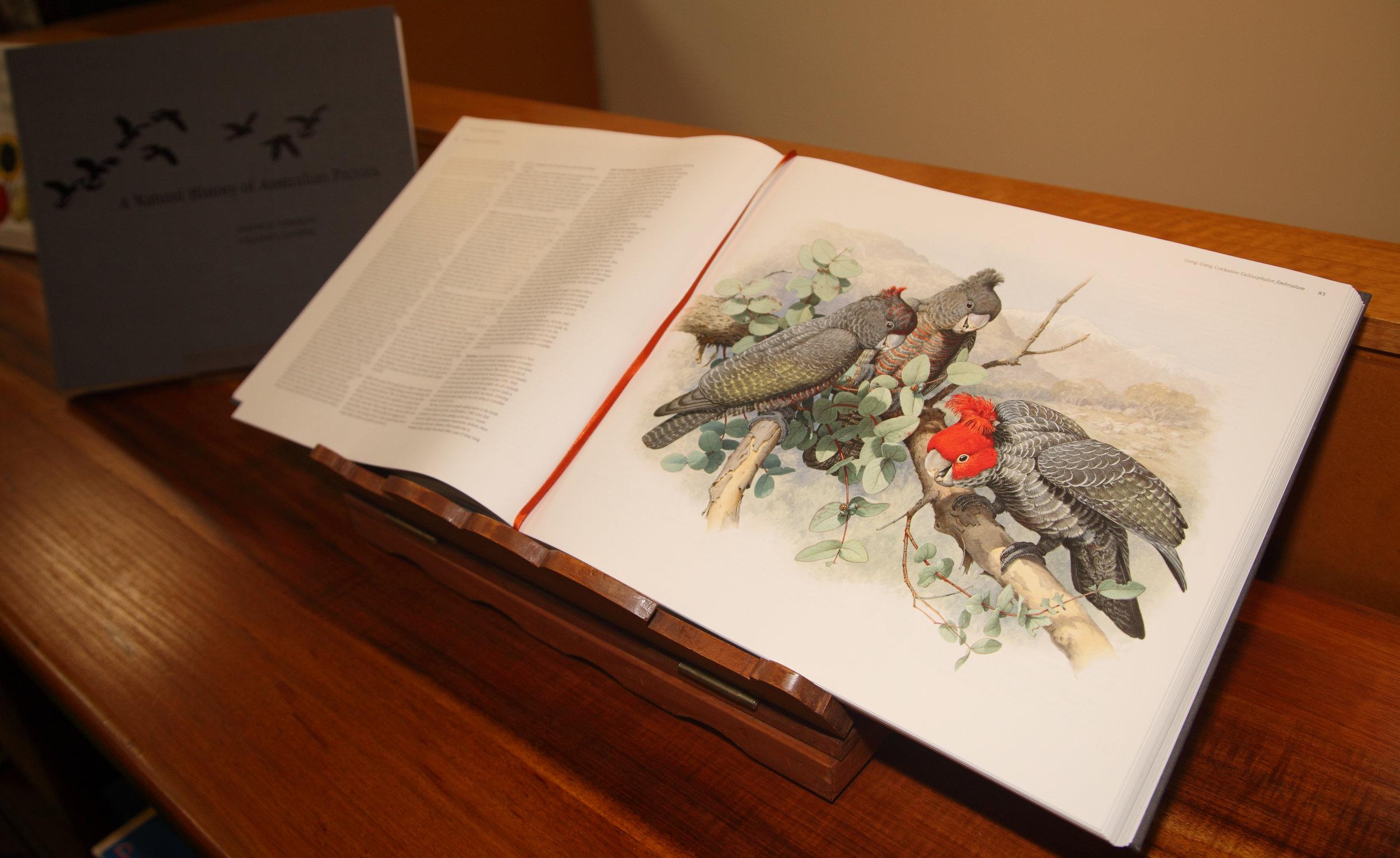 Cooper Parrots 01.jpg