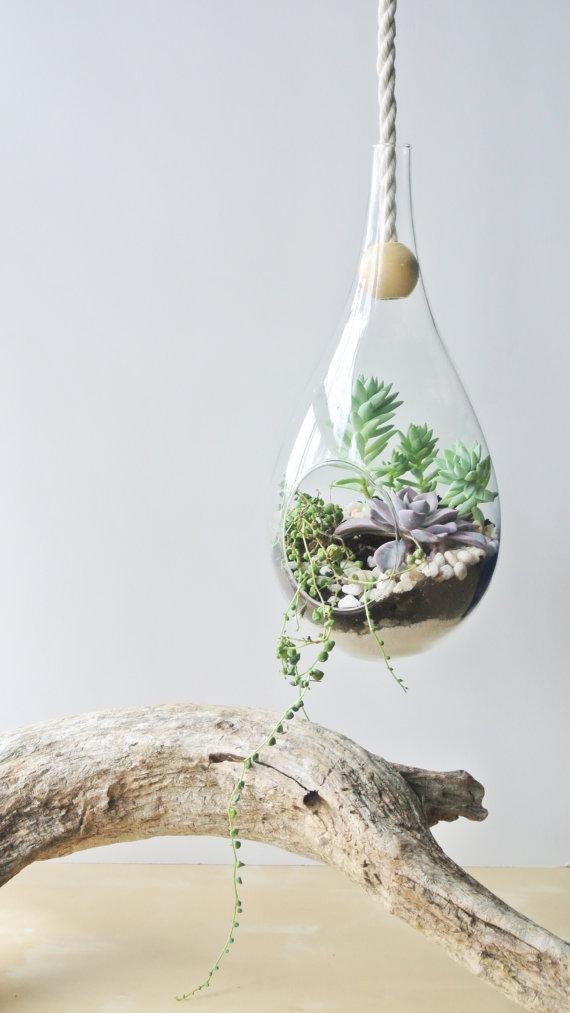 the Zen Succulent.jpg