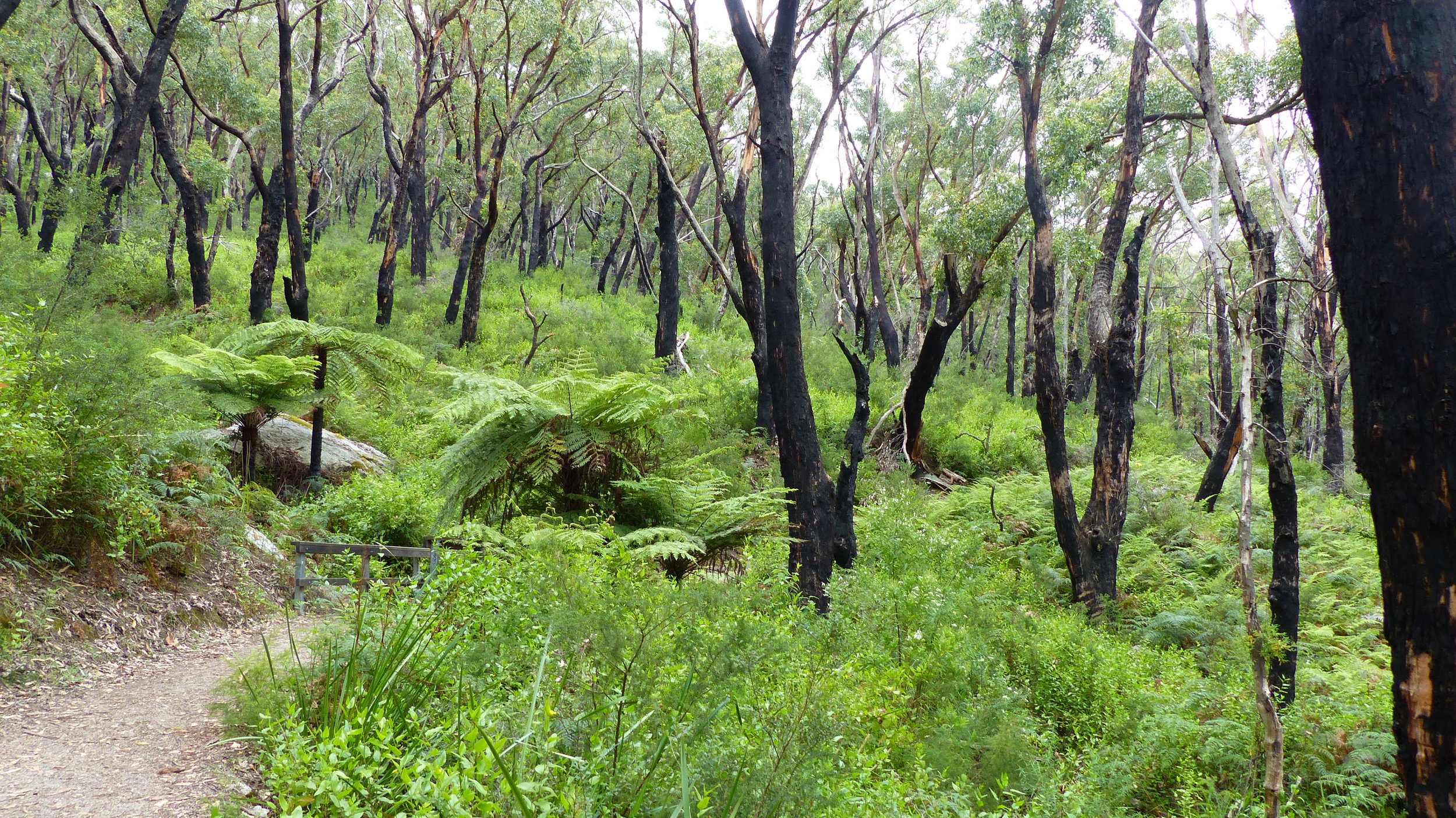 lush ferns in the forrest