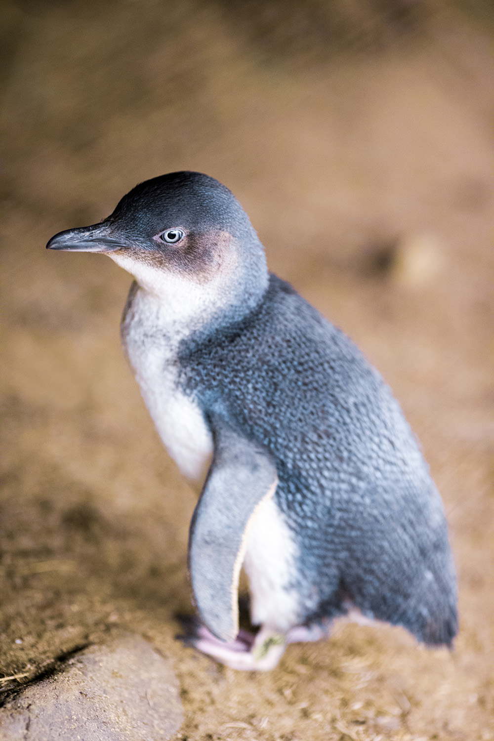 Penguin chilling out