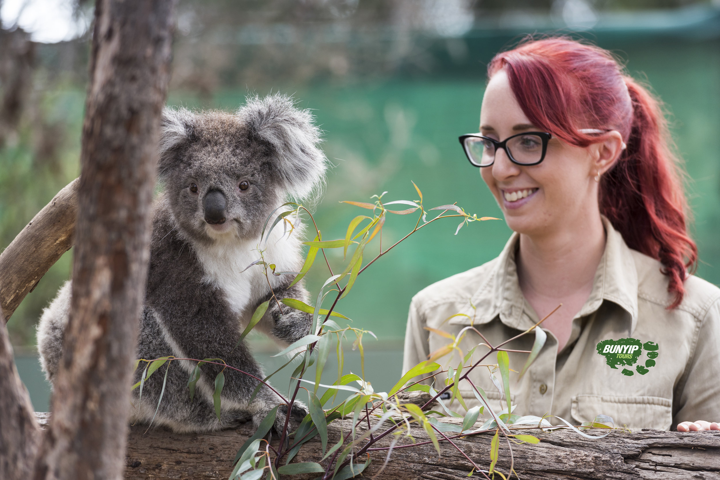 Moonlit Sanctuary Koala Encounter.jpg