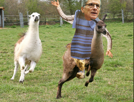 FCC chairman Tim Wheeler riding a llama in the dress. Memes like this swept the internet last week.