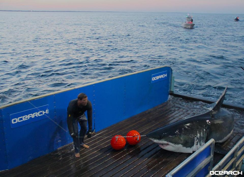 Photo: OCEARCH