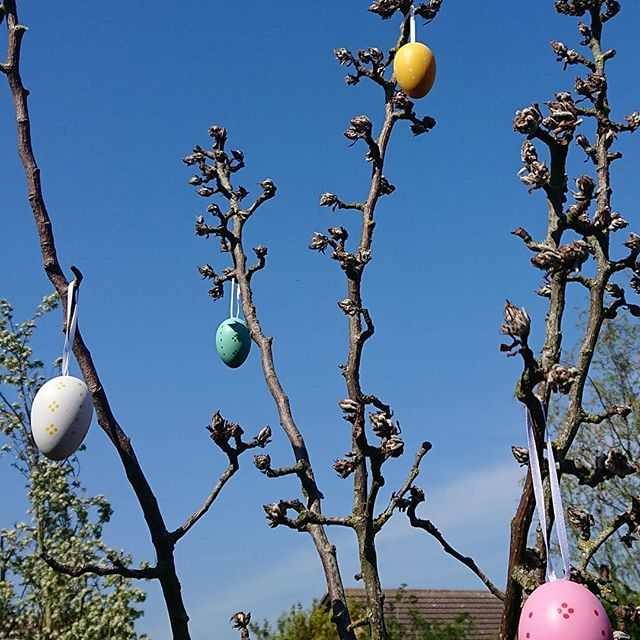 Happy Easter weekend all ❤️🐇🐣🥚 Yesterday I realised I had nowhere to hang the spring decks so Mr L pulled some branches together from where he had pruned the top off the pear tree, et voila! Normally the weather is so cold for Easter?! We ate pie and brownies for lunch followed by scampering about on the lawn in the rays, running an egg hunt for the kiddies and then a spot of volleyball over the washing line 🤣☀ . . . . . #eastertree #easterdecorations #happyeaster #spring #blueskies