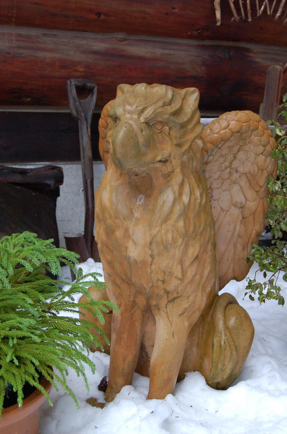 Zephyrus, one of our pet griffins