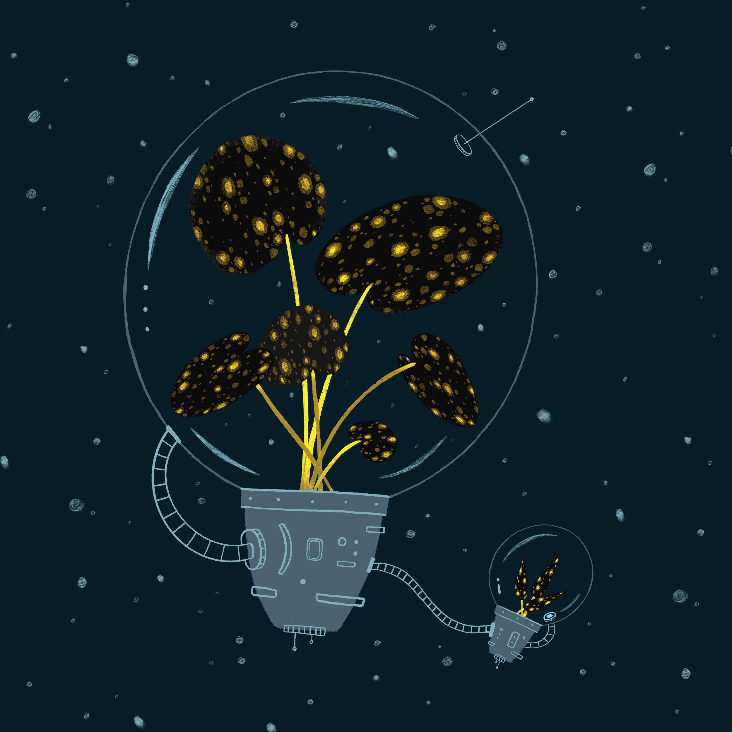 SpacePlant3 web.jpg