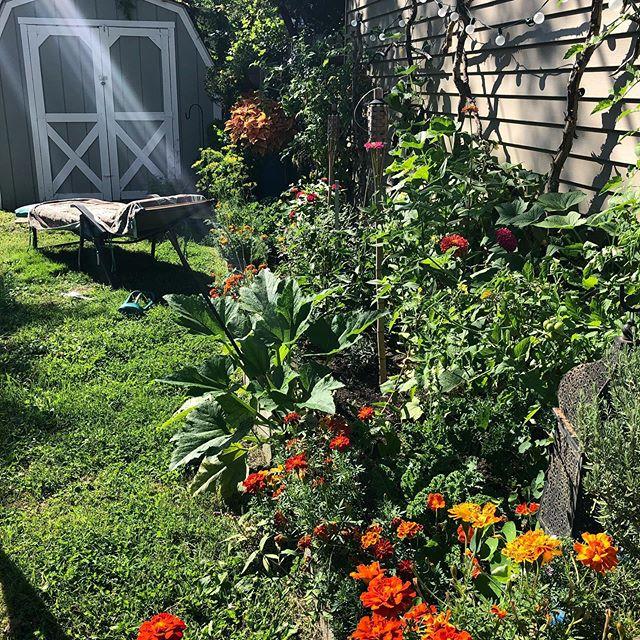 Made for this moment.  #garden #sitandrelax #sunshine