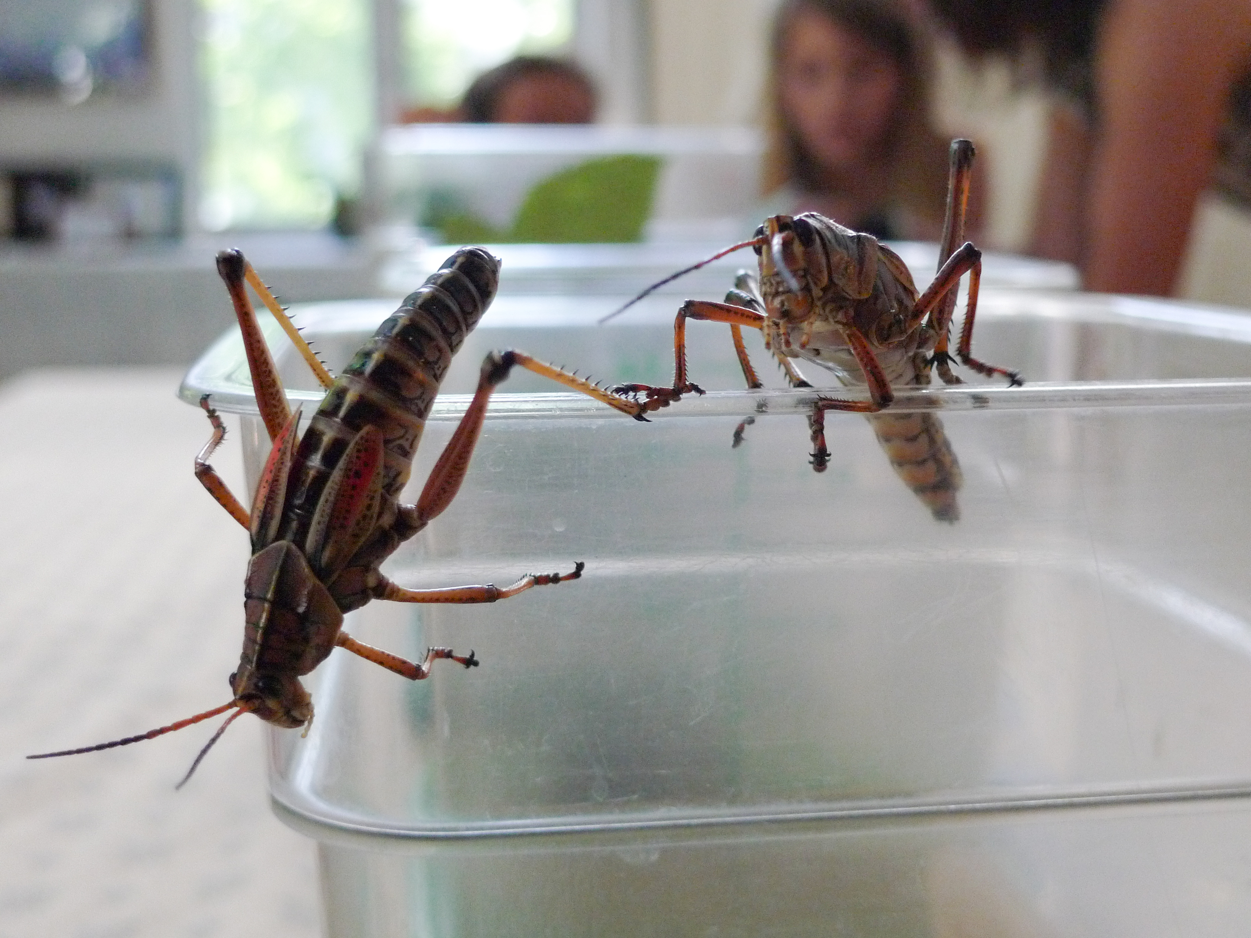 hoop_insects-164.jpg