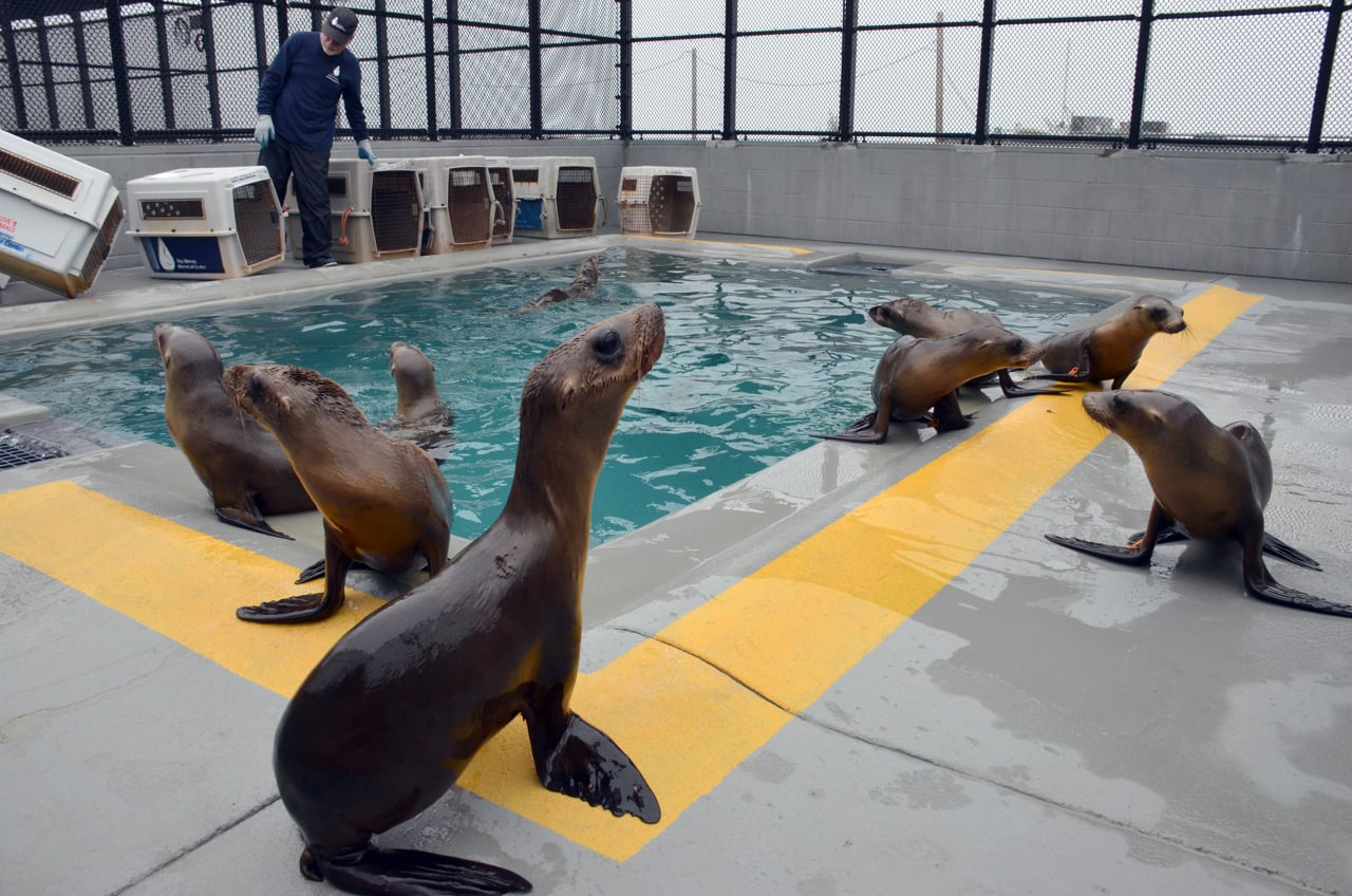 Photo Ingrid Overgard  / The Marine Mammal Center