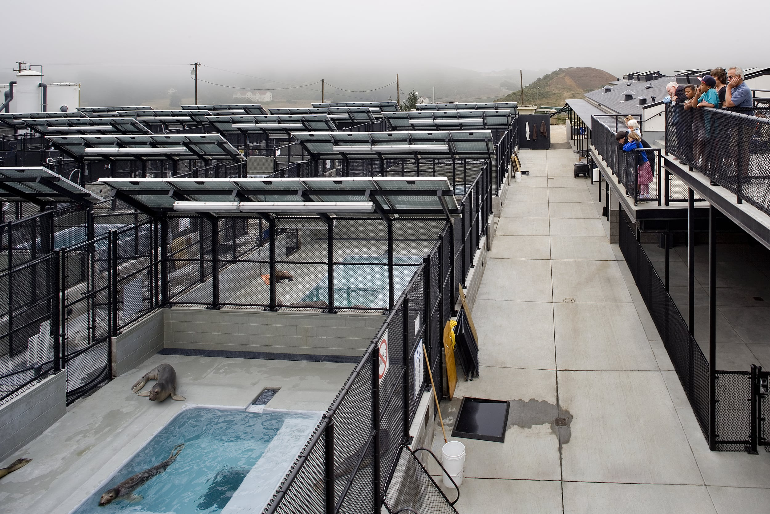 Photo ©David Wakely / The Marine Mammal Center