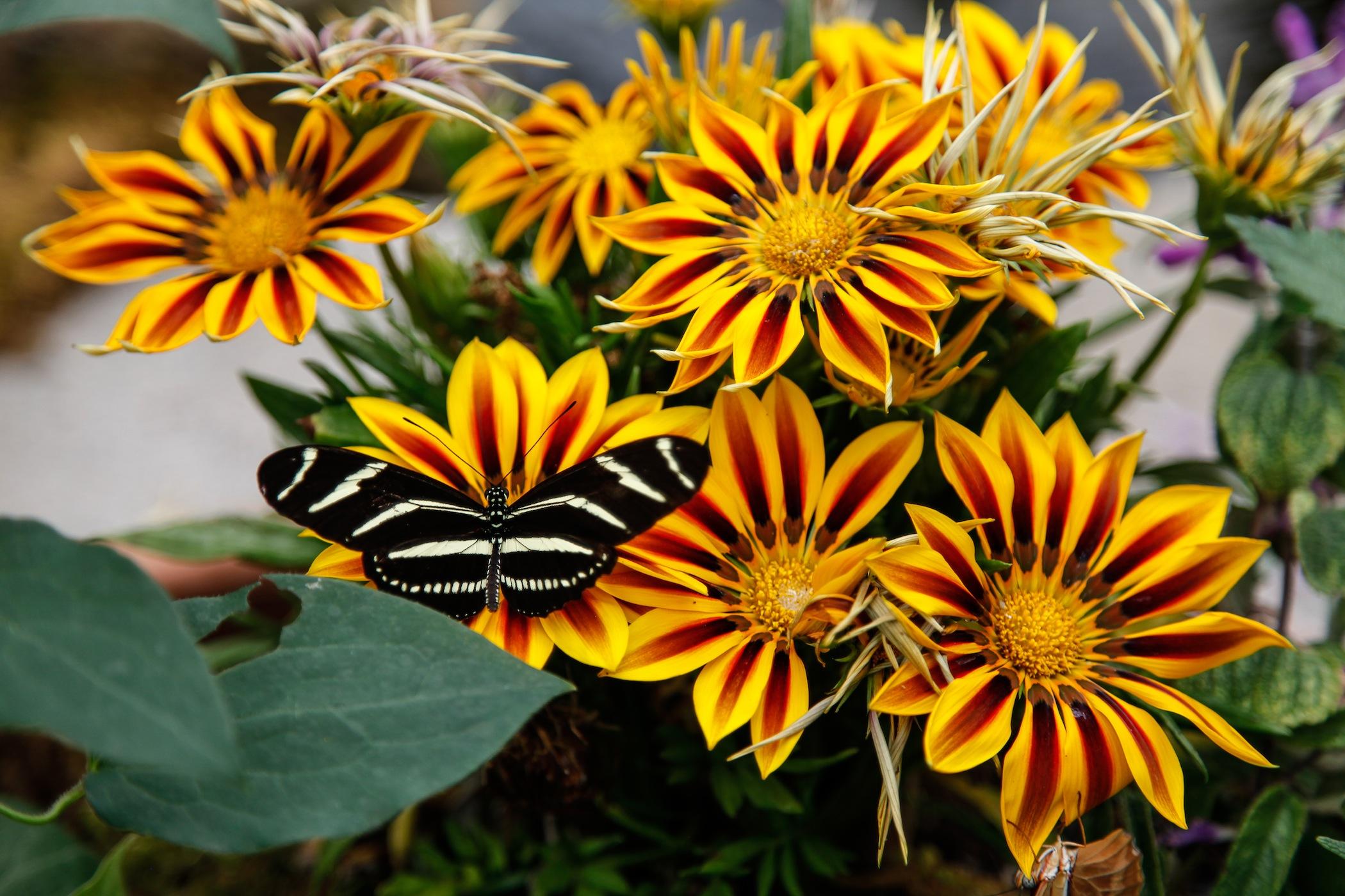 Butterflies2013:2.jpg