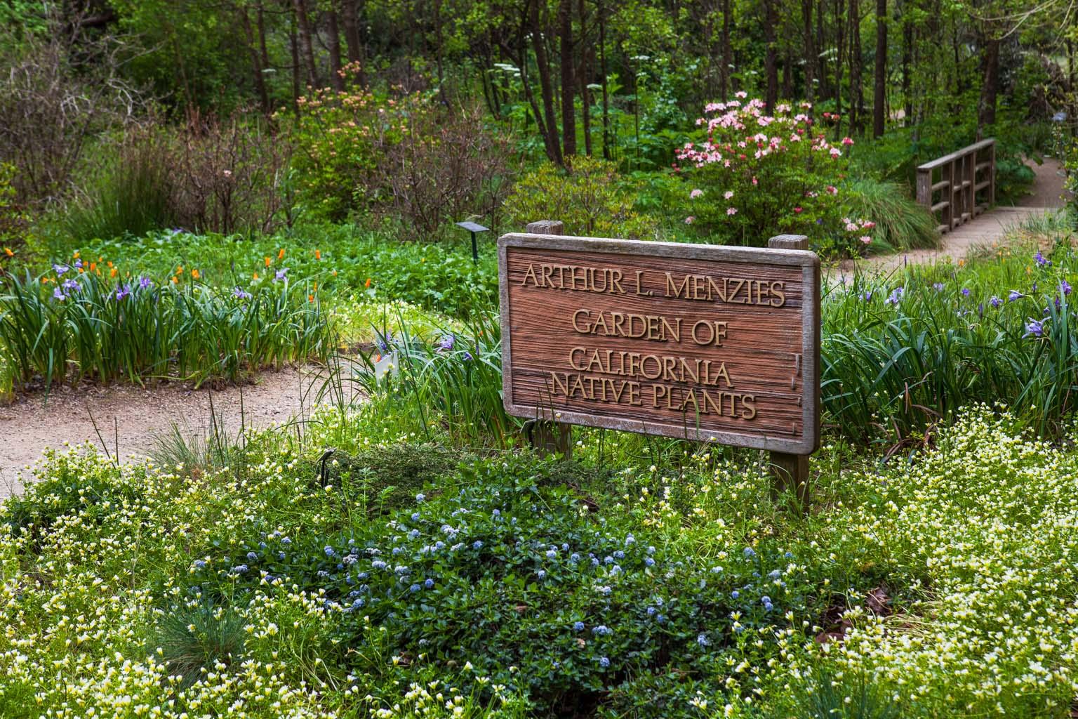 CA Native Garden   Native Garden Entry   Saxon Holt
