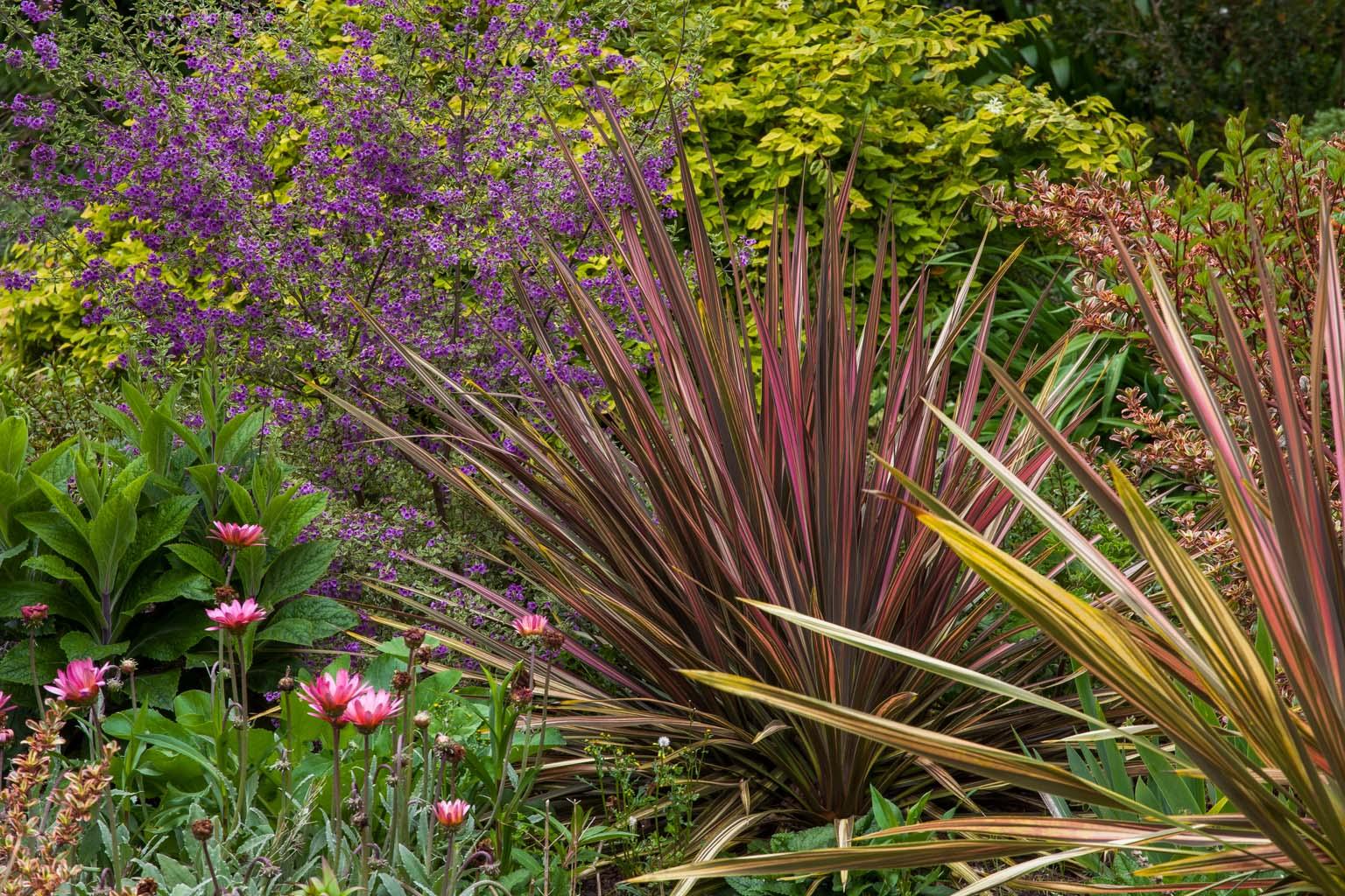 Zellerbach Garden of Perennials  Saxon Holt