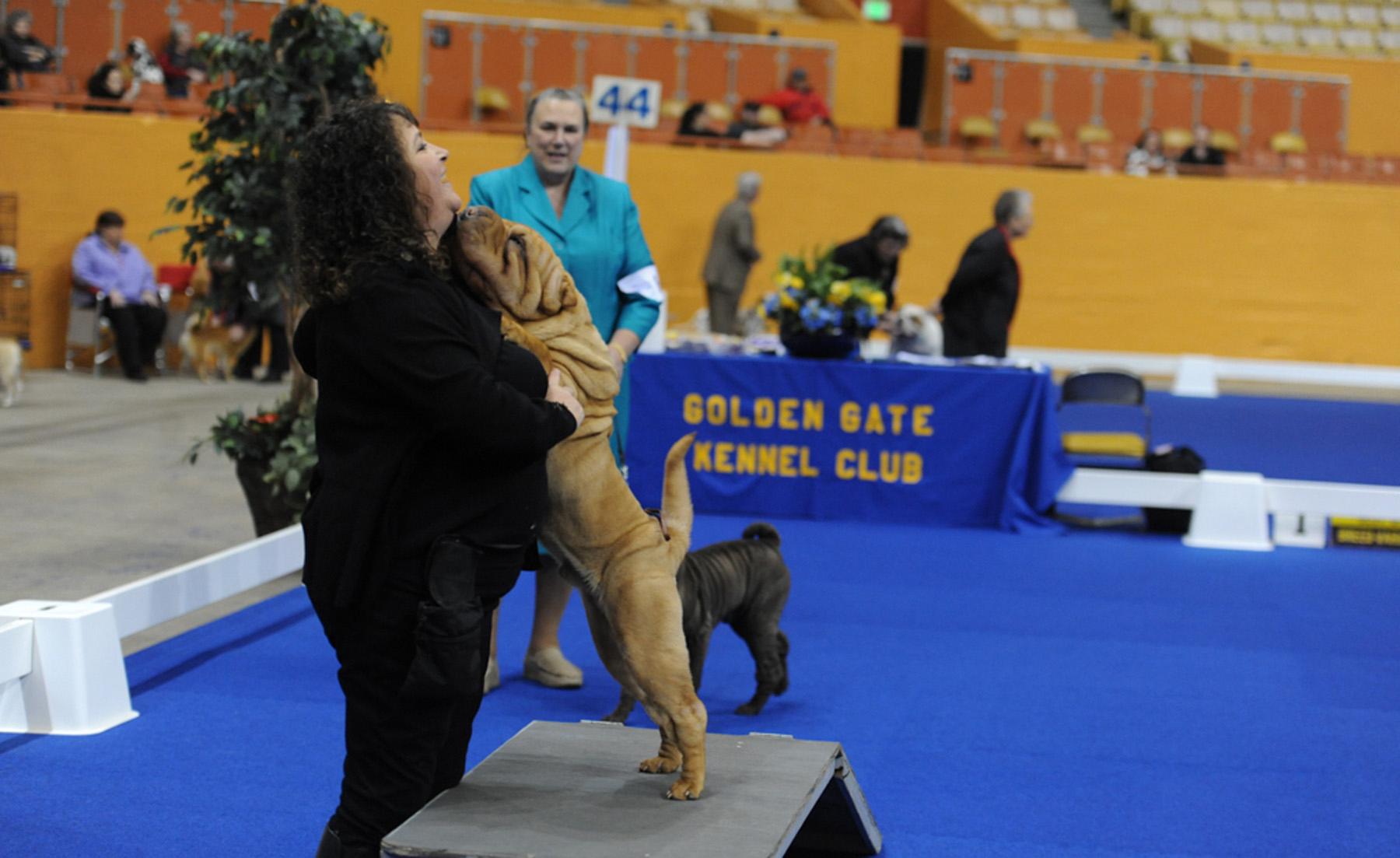 Golden Gate Dog Show 2017 (516 of 792).jpg