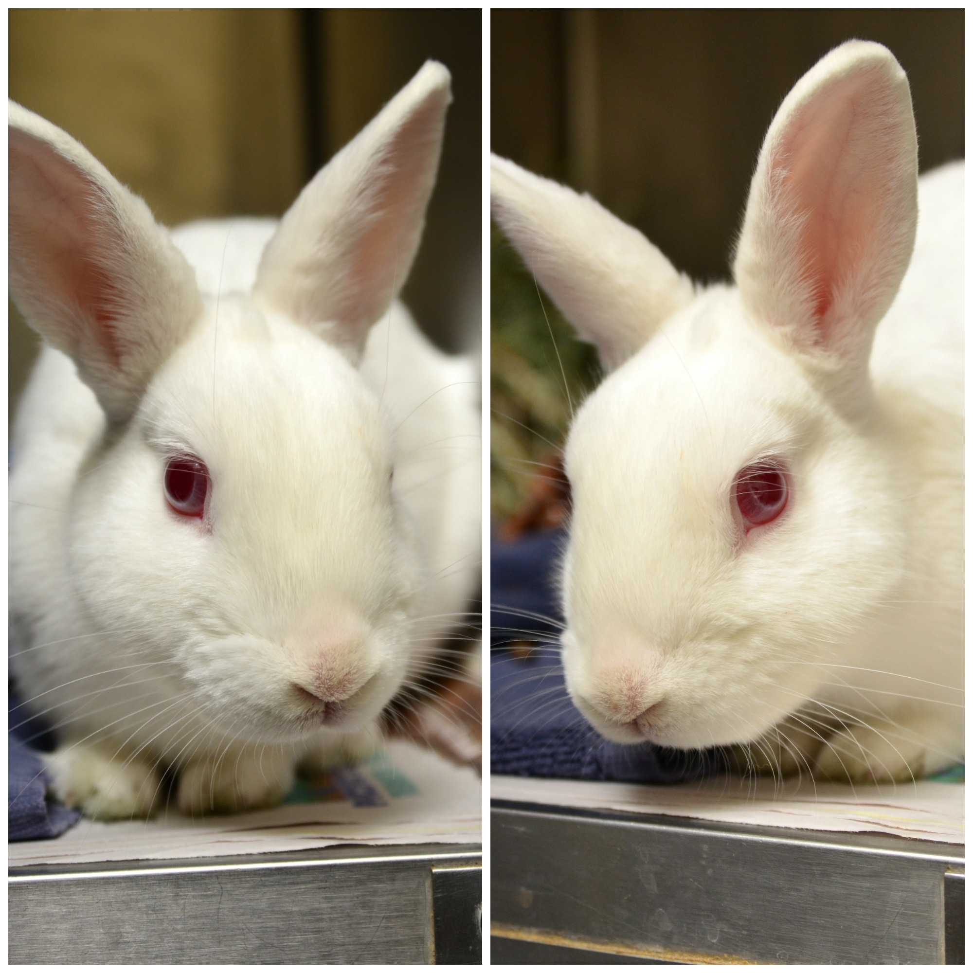 Cannon the Bunny Square Collage.jpg