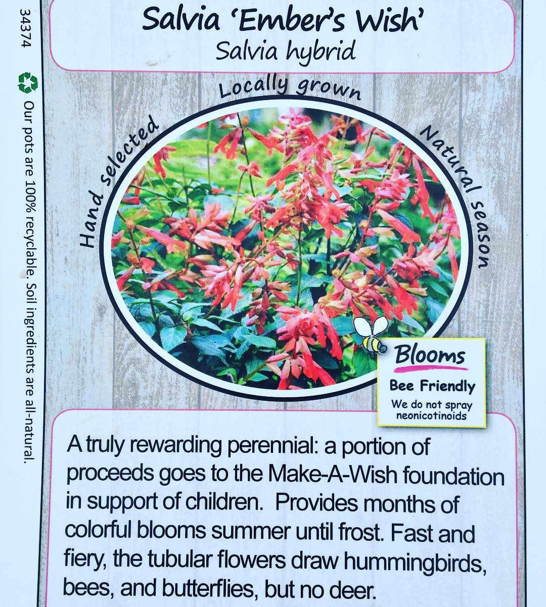 Choose non-GMO Seeds - Next time you're buying plants, choose growers who are committed to producing responsibly made plants. Today I bought this stellar salvia from Blooms: they don't grow GMO varieties, their pots are 100% recyclable, and they don't spray neonicotinoides which means they don't use an insecticide that harms bees. And as if that wasn't good enough, a portion of the proceeds from my salvia purchase goes to Make-A-Wish foundation in support of children. #bloomswholesalenursery #savethebees #shopsmart #plants #littlethings #marincounty #gardening #salvia #littleactsbigchange 🐝