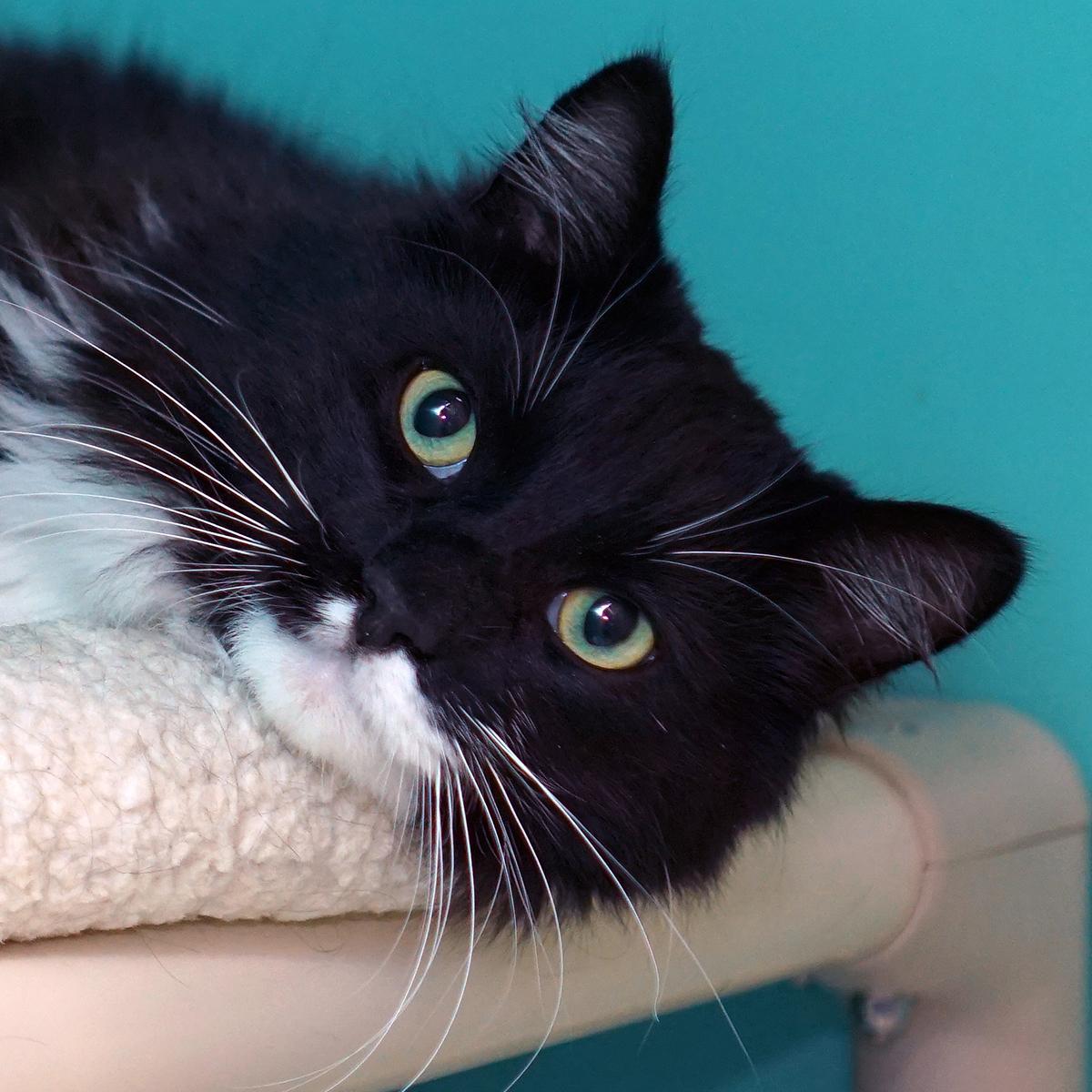 Basil the cat.jpg