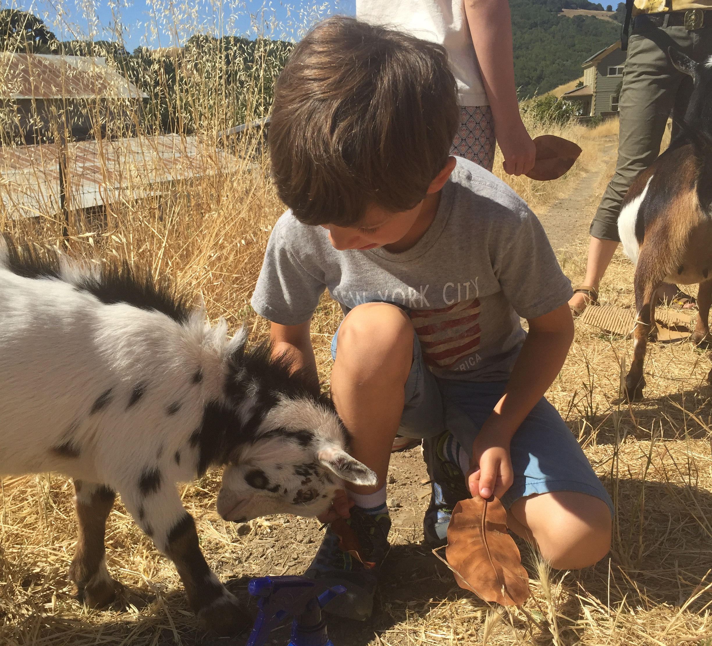 Farm - Tend the land on an organic farm. Make connections to where our food comes from and learn the skills of farmers and ranchers. Vilda's Farm theme includes the following camps: