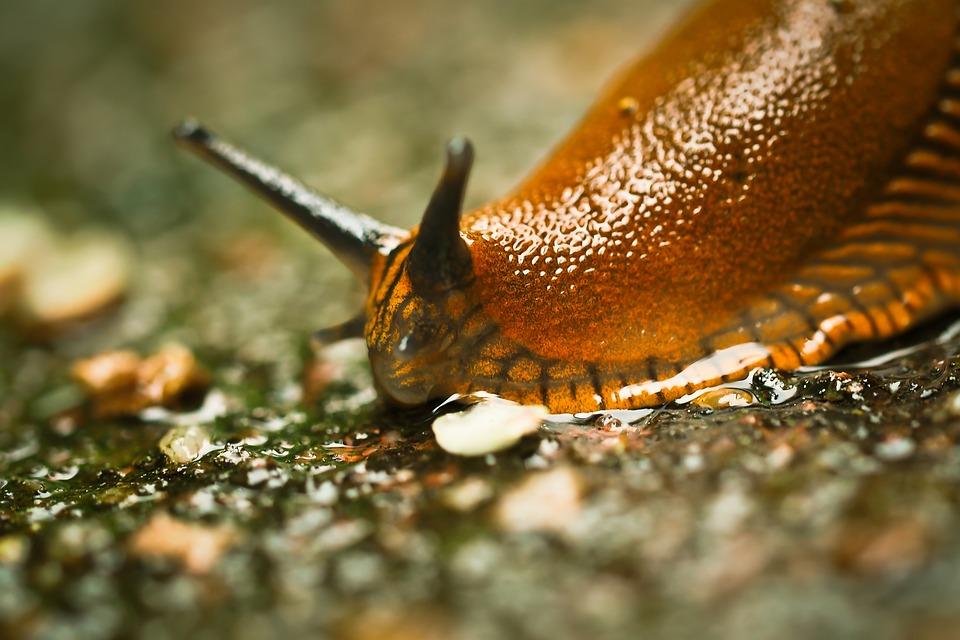 snail-1422180_960_720.jpg