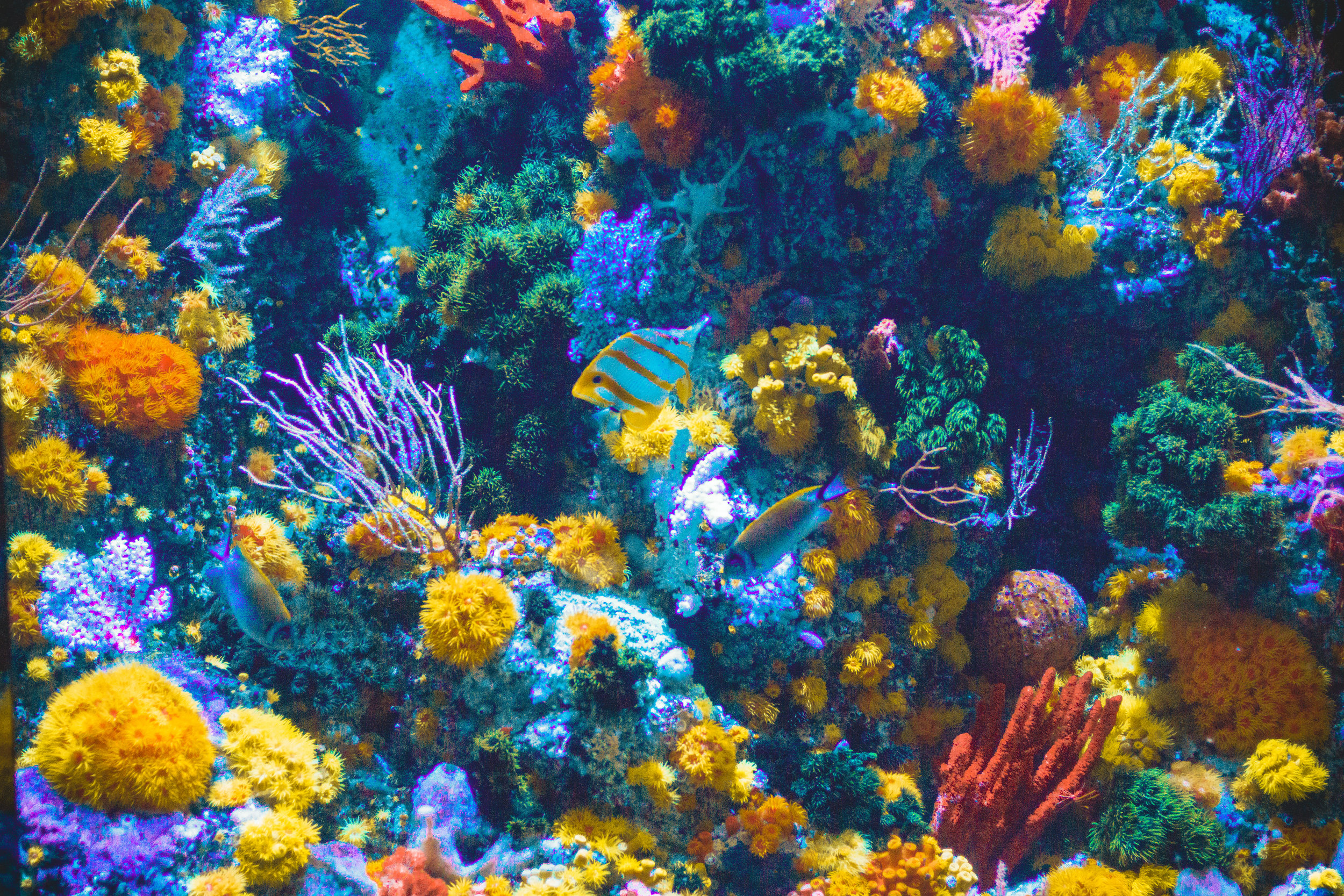 Use Reef-Safe Sunscreen - It's true….the wrong sunscreens poses a hazard to coral reef conservation and cause irreparable damage. Refer to the EWG website for environmentally safe products.
