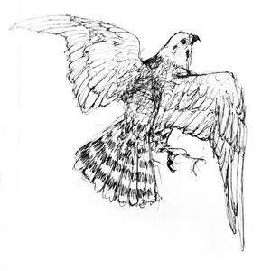 falcon_002_0.jpg