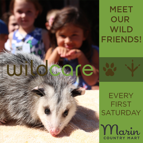 WildCare at the Mart - Meet the Animals! - June 29, 10:00am - 11:30amJoin us in the courtyard to meet the wild, rescued animals and their handlers from Wildcare! Keep an eye out for Sequoia, their pretty Northern Spotted Owl; Grace, their Red-Tailed Hawk; or the super cute Virginia Opossum named Mama. Learn, play, and give back to the animals that make our natural surroundings so beautiful here in Marin County!