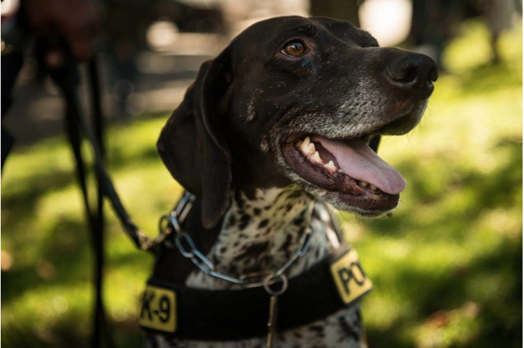 K-9 Heroes: Bark at the Park - Saturday, October 12, 11am-1pm, Duboce Park, San FranciscoDemonstrations include dogs trained in urban search and rescue, detection and more. Learn why these K-9's are heroes to so many!