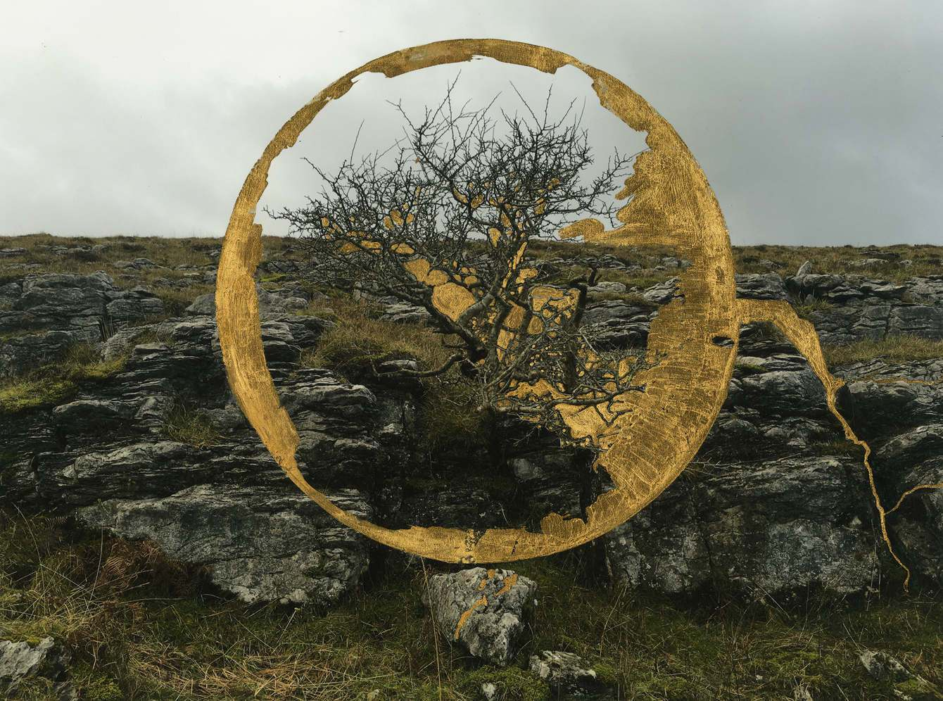 "Whit Forrester, ""Sainted Tree, Ireland,"" 2016, archival inkjet print and gold leaf"