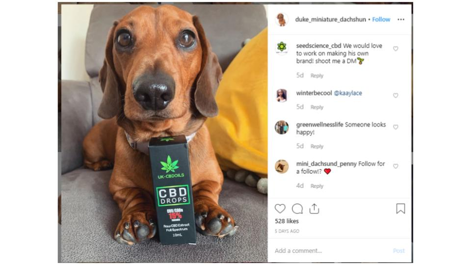 Source: Post from pet influencer, Duke the Sausage Dog (@dukeminiature_dachshund on  Instagram