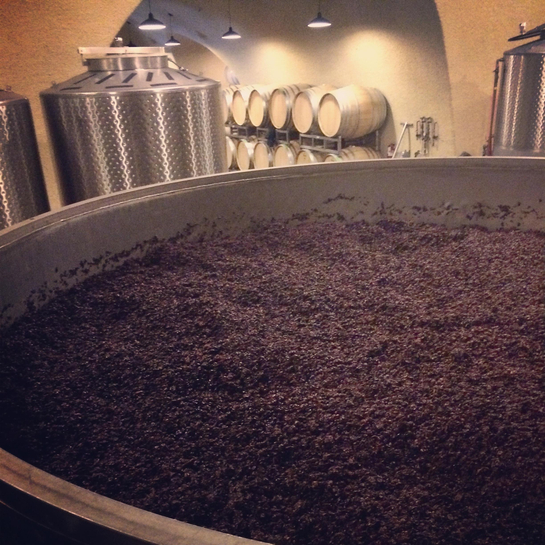 Pinot Noir in stainless steel tanks where fermentation begins.